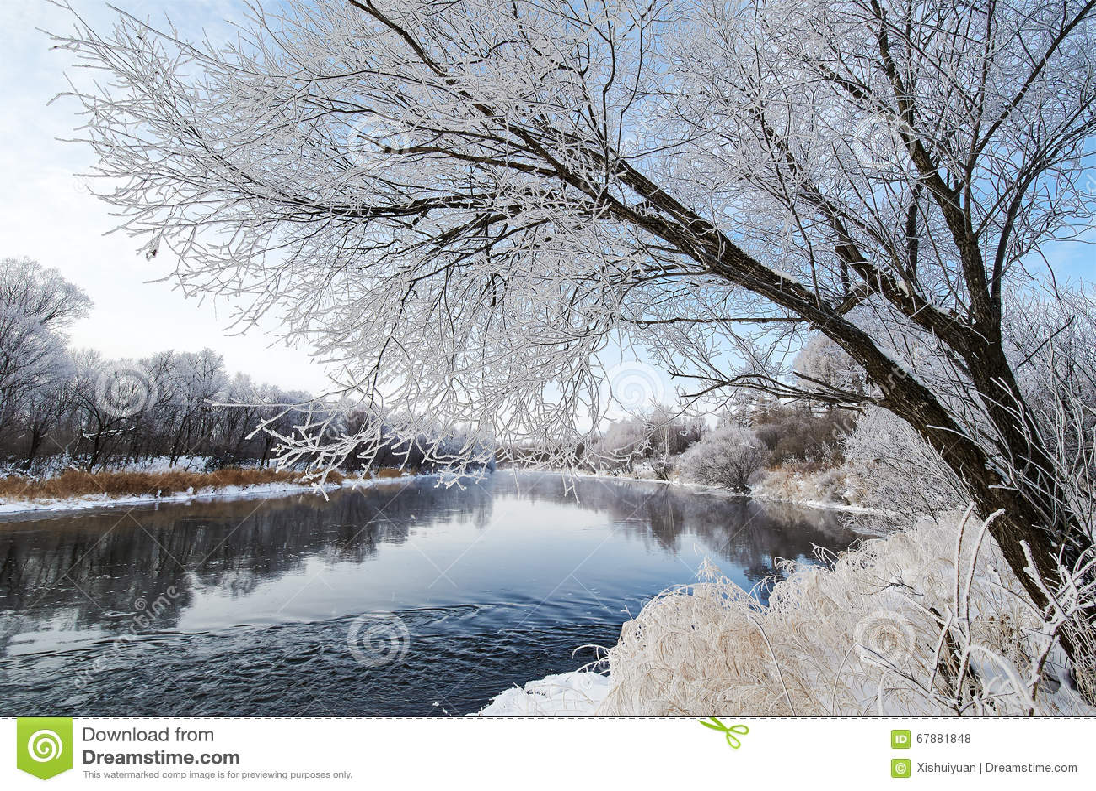 冬天河和树风景