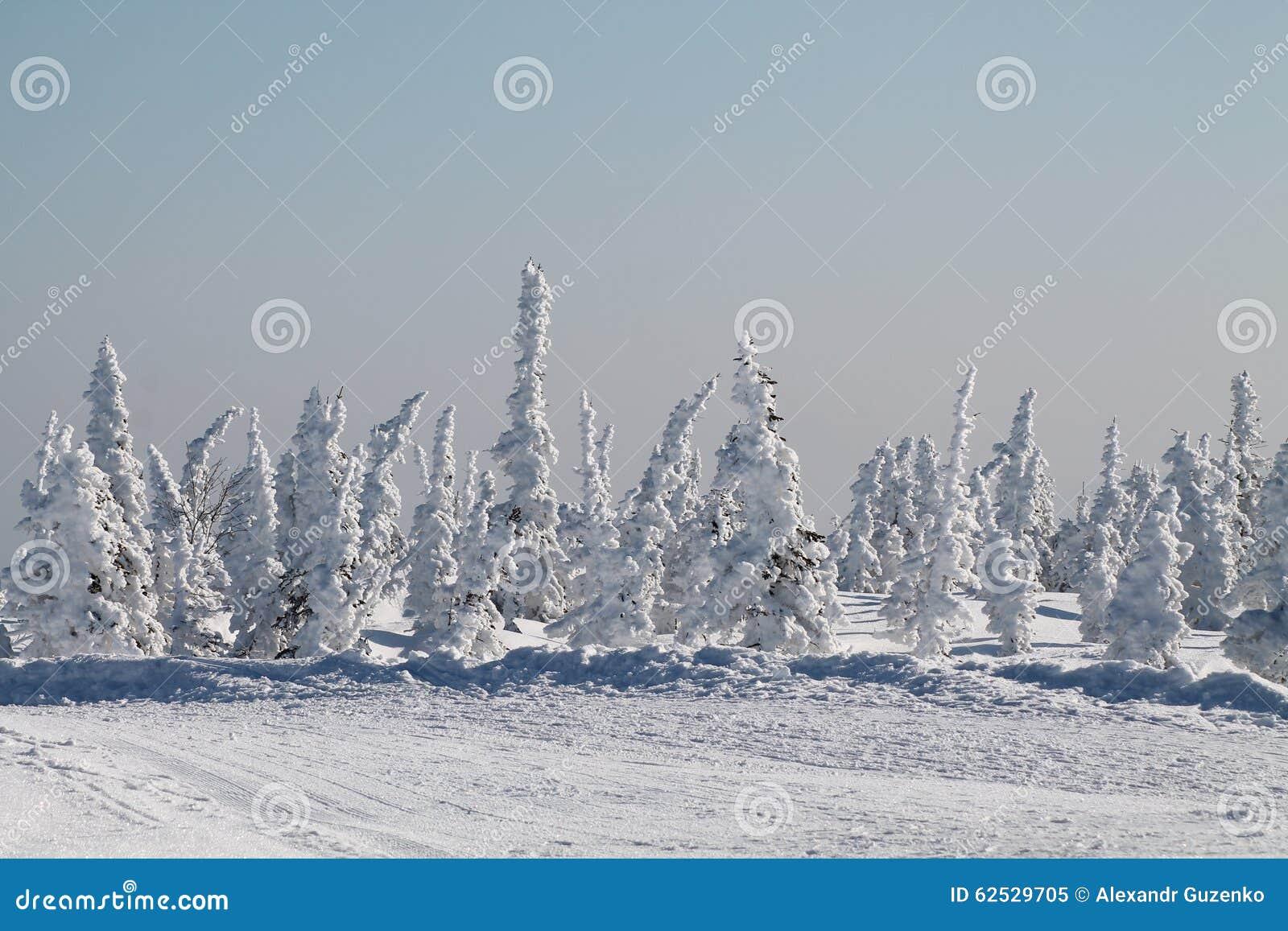 冬天雪的山森林