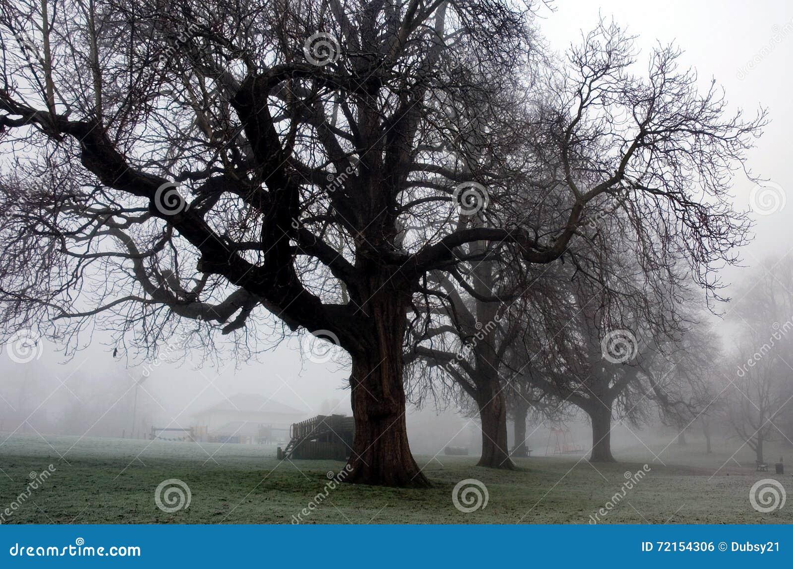 冬天令人毛骨悚然的树在Diss诺福克公园