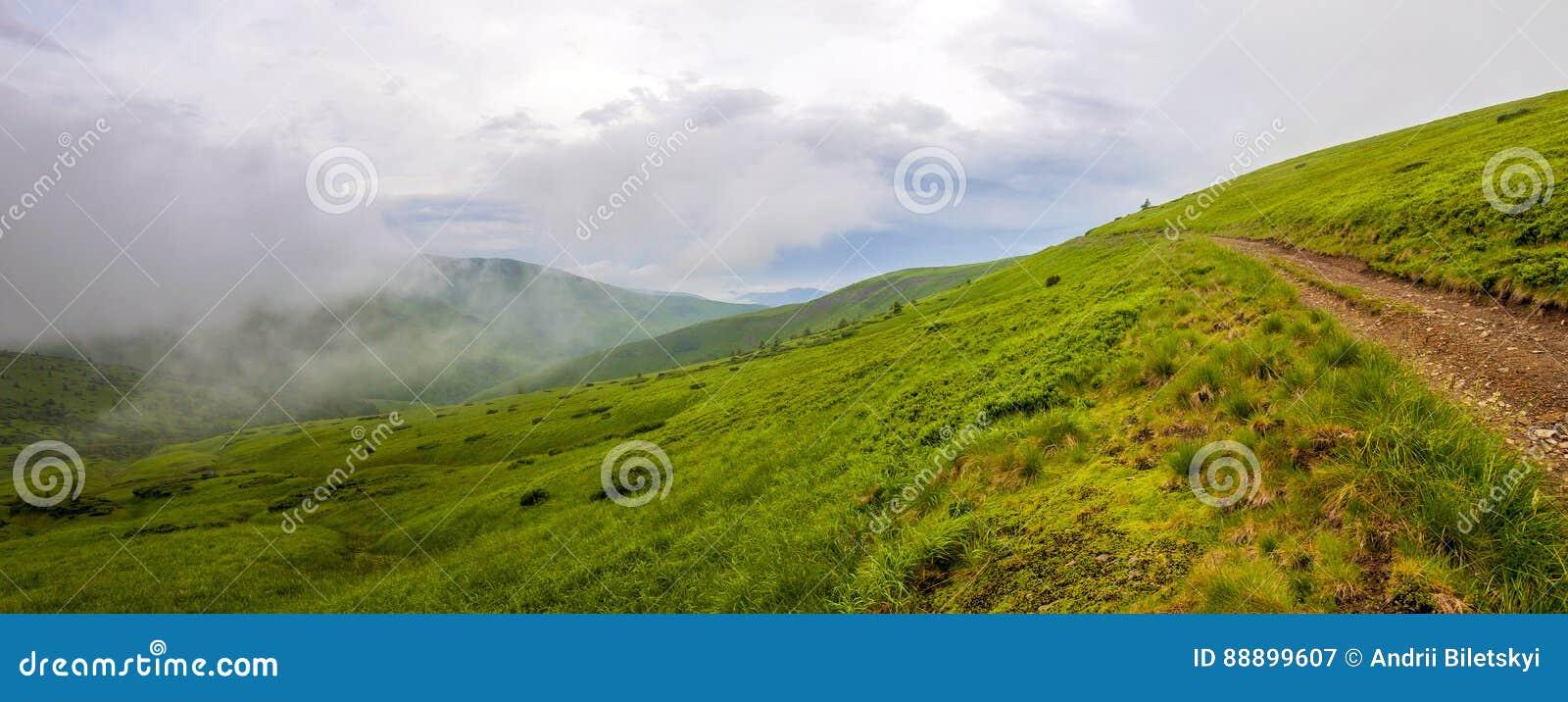 冷的有雾的夏天早晨全景在喀尔巴阡山脉的