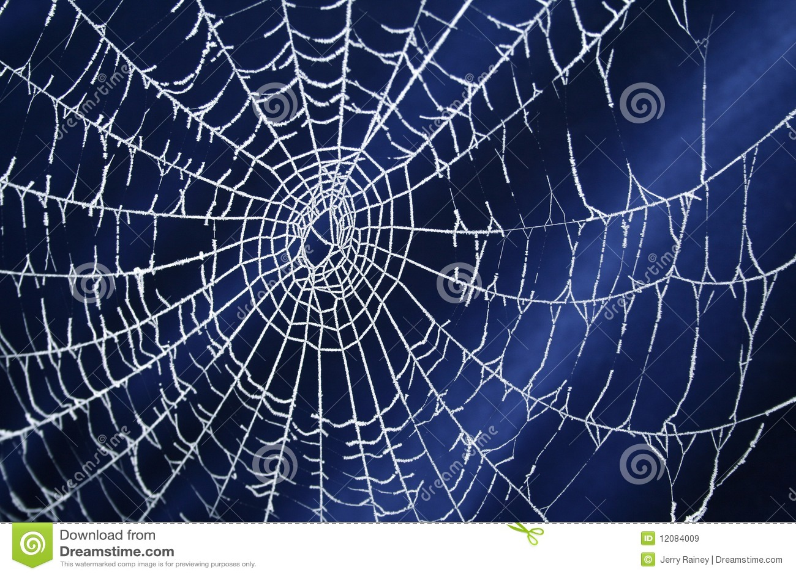 冻结的蜘蛛网