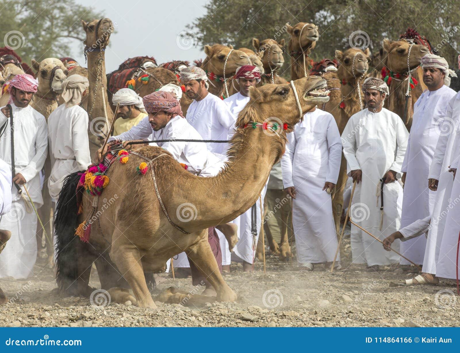 准备好阿曼的人赛跑他们的在的骆驼多灰尘的国家