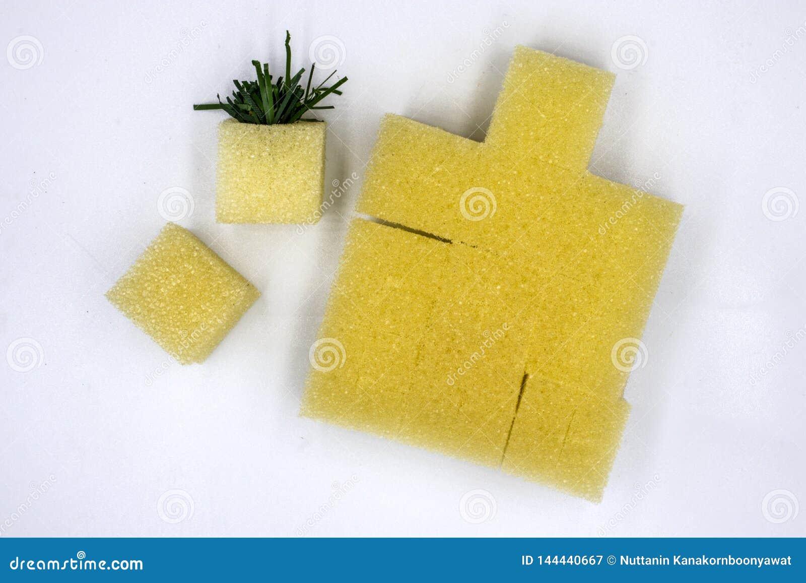 准备的海绵被种植在水栽法菜剧情,立方体海绵,被隔绝的白色背景