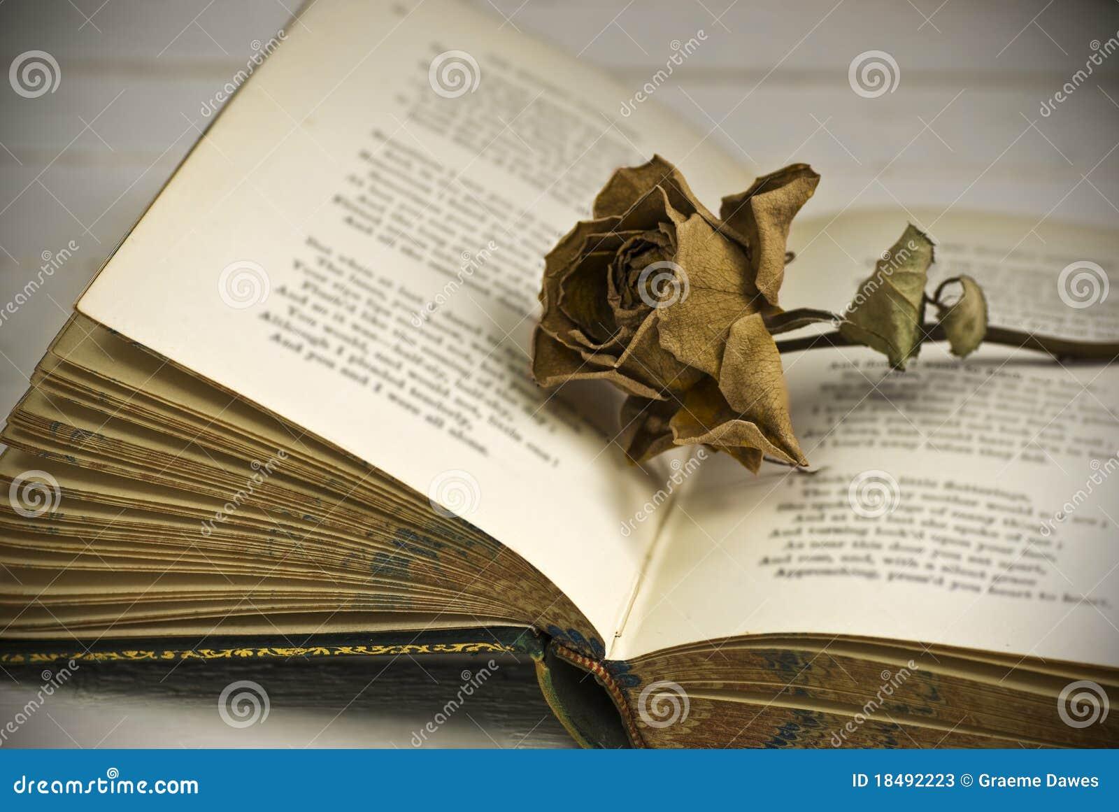 凋枯的书玫瑰