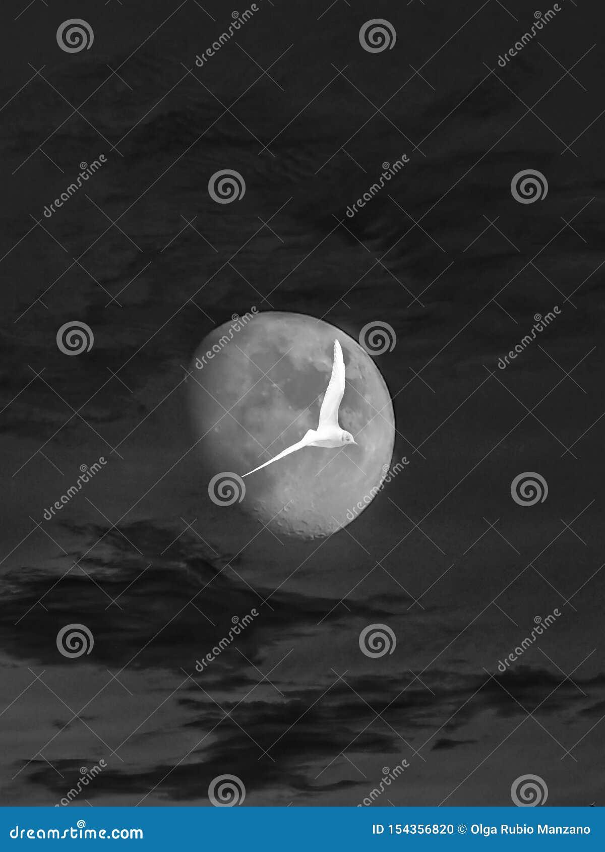 凝思丝毫月光