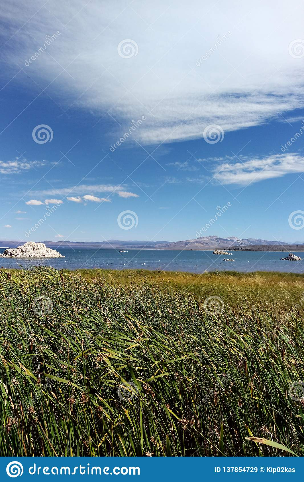 凝灰岩塔岩层在莫诺湖是淡水春天的互作用和瘤形成的钙碳酸盐尖顶和