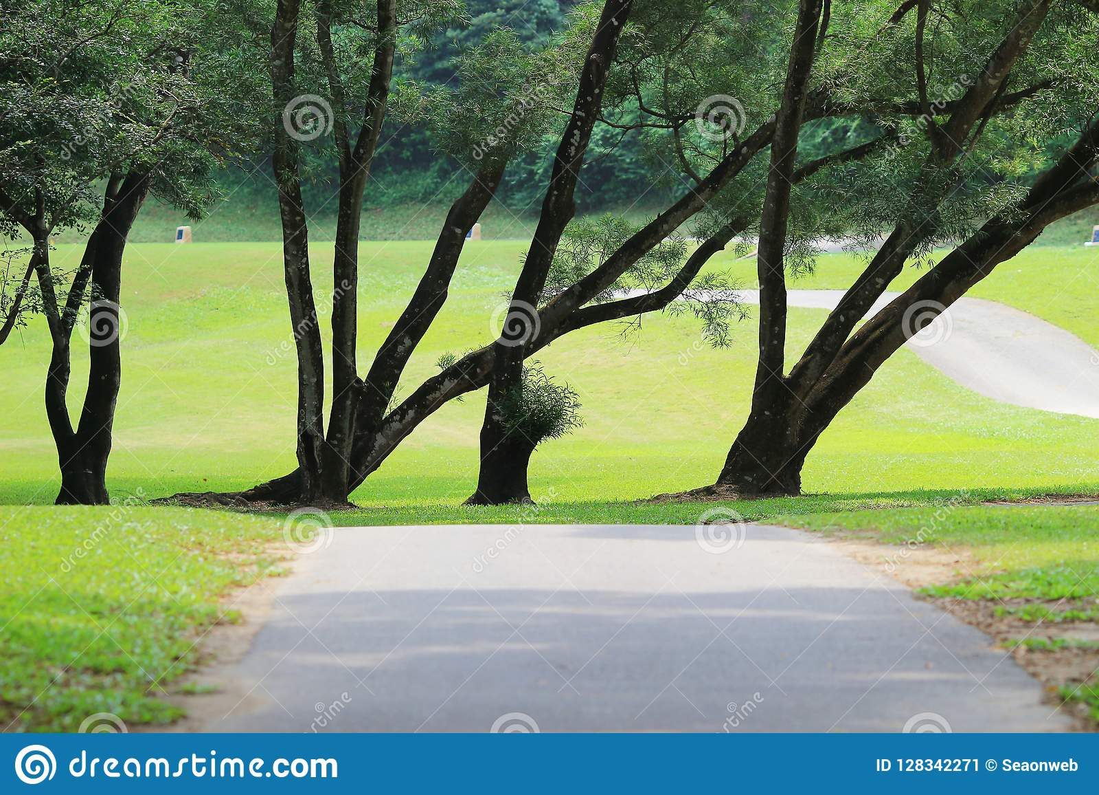 分支和树 旅行本质上
