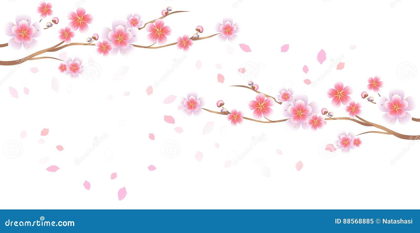 分支在白色背景隔绝的佐仓和瓣飞行 Apple结构树花 樱花 传染媒介EPS 10, cmyk