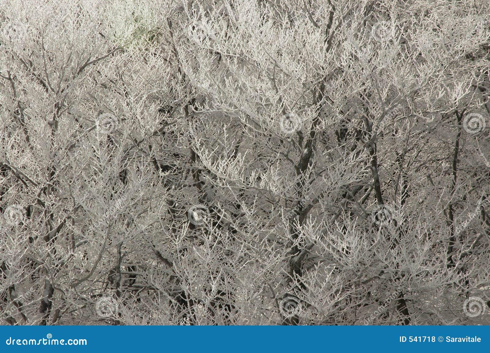Download 分行冰 库存照片. 图片 包括有 多雪, 冬天, 抽象, 深奥, 季节性, 背包, 季节, 本质, 白兰地酒 - 541718