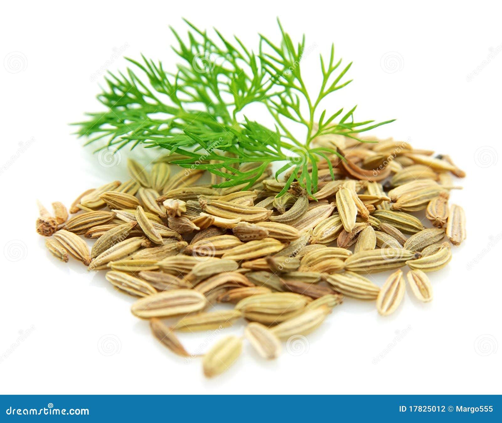 分行茴香籽