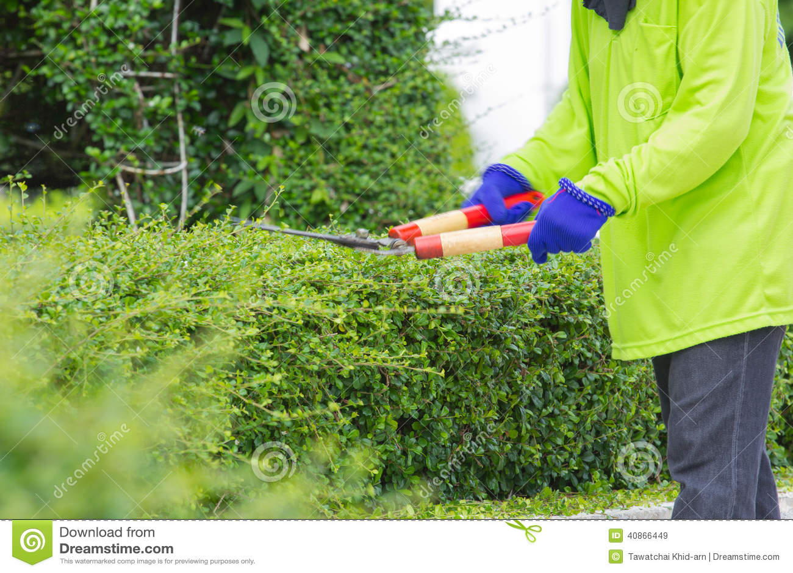 切开绿色灌木(行动迷离图象)的一个人的被弄脏的图象