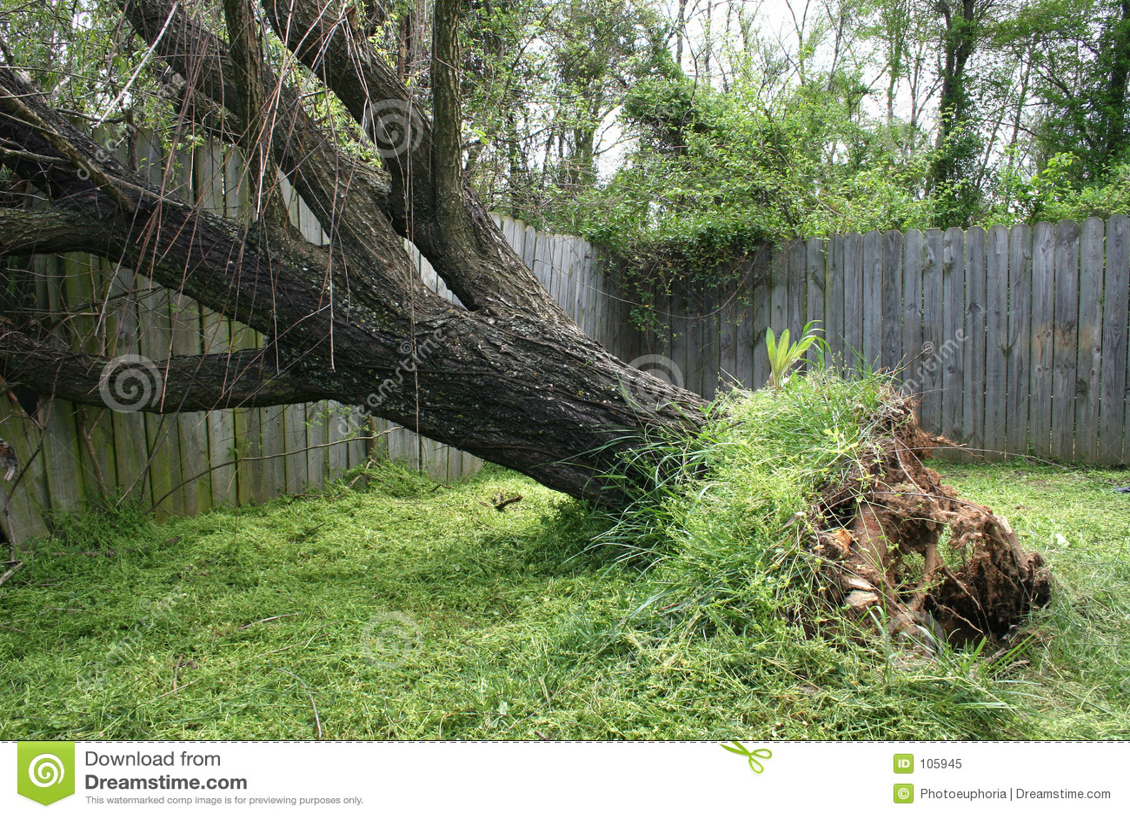 划分为的结构树杨柳