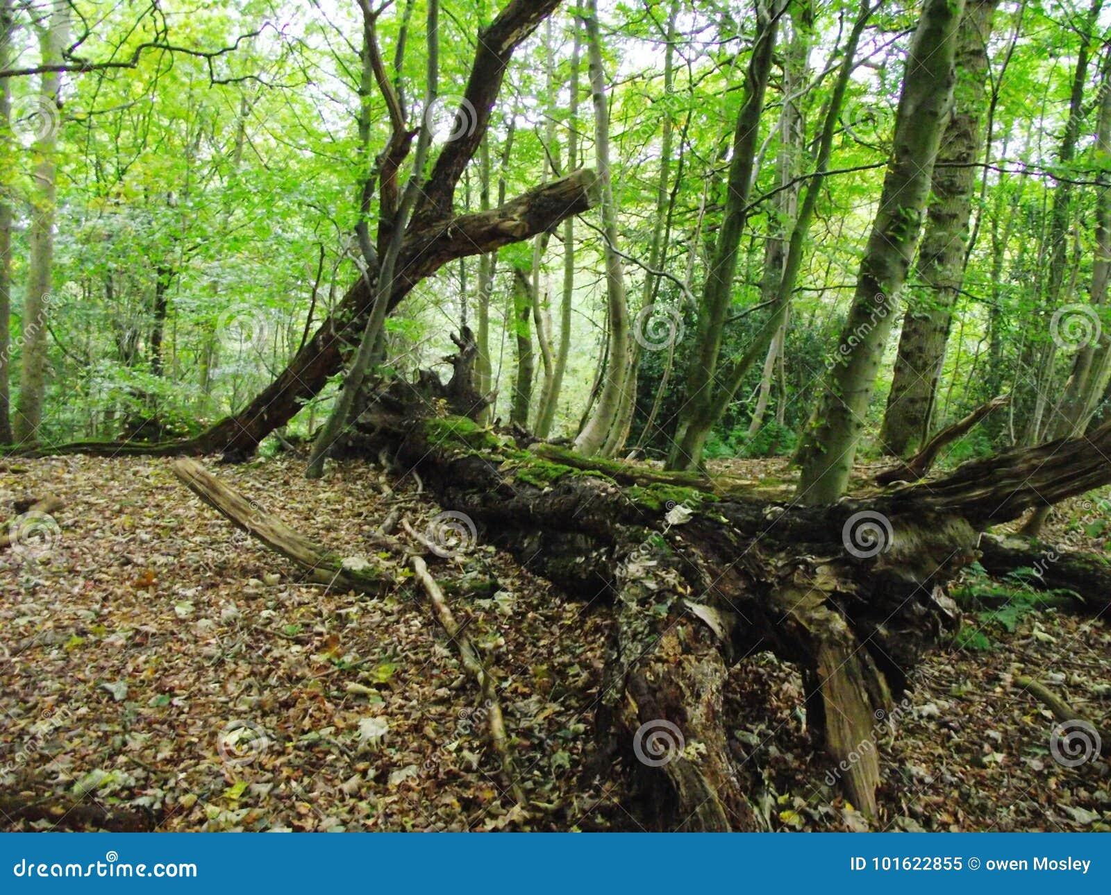 划分为的结构树