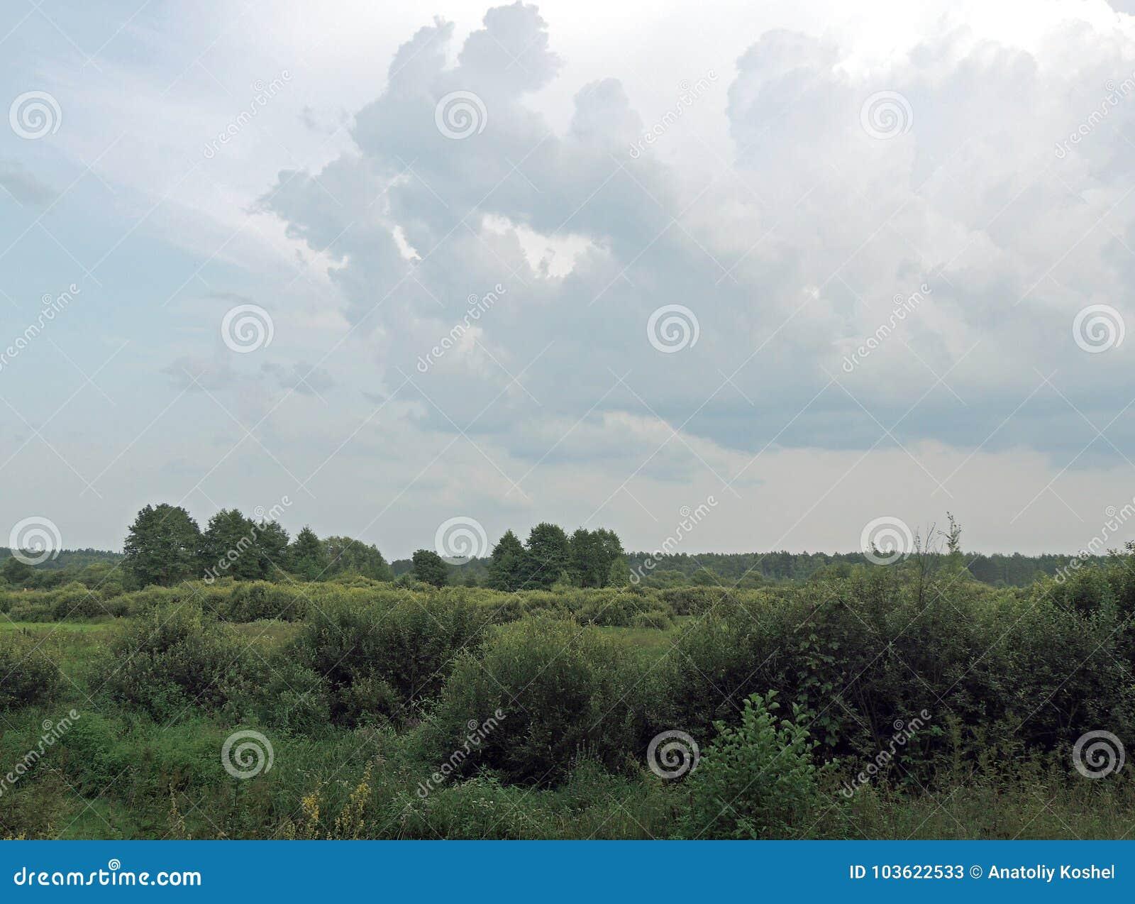 别列津纳河的洪泛区 夏天 8月海湾草甸和森林