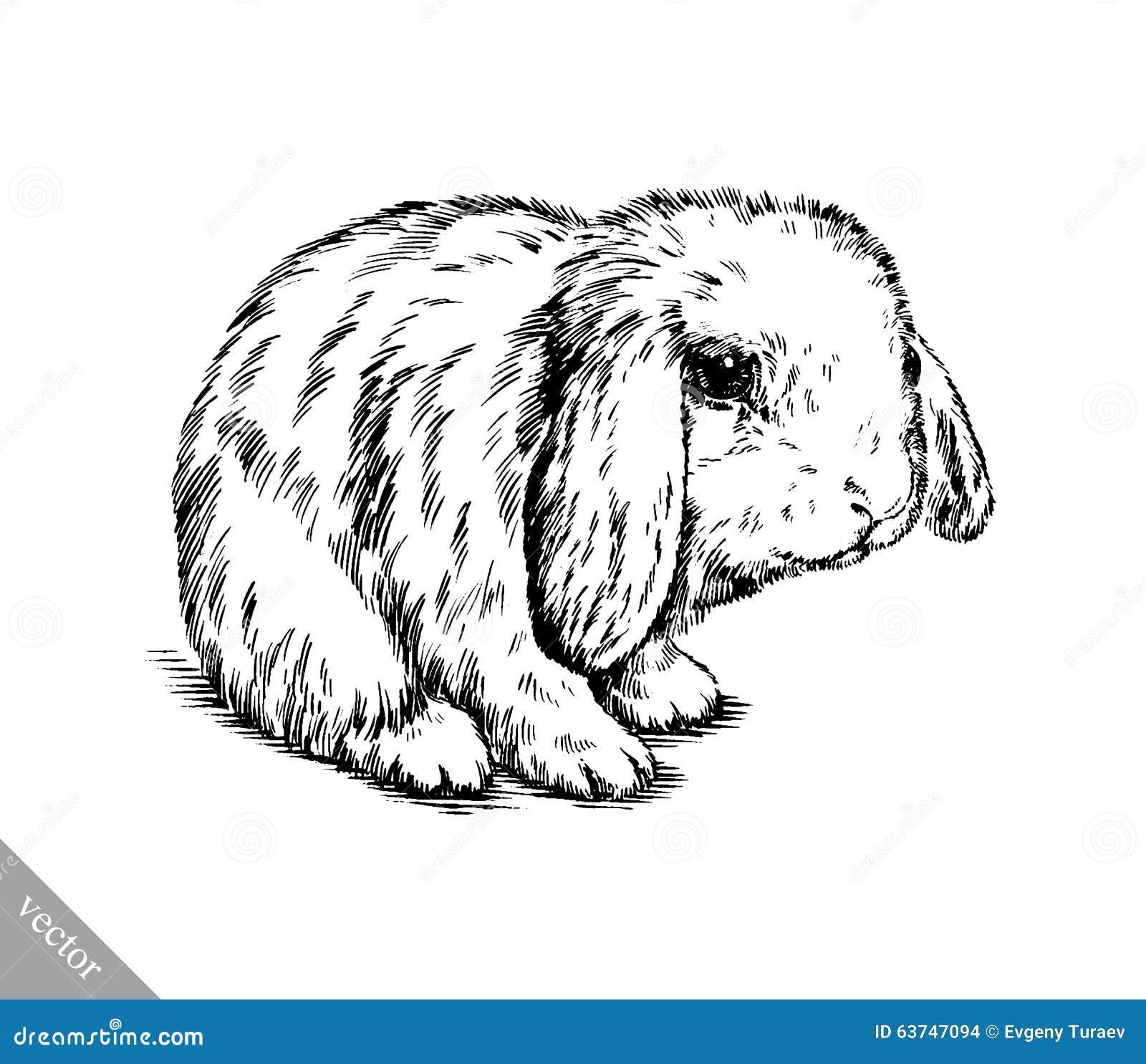 黑白传染媒介刷子绘画墨水凹道隔绝了兔子例证.图片