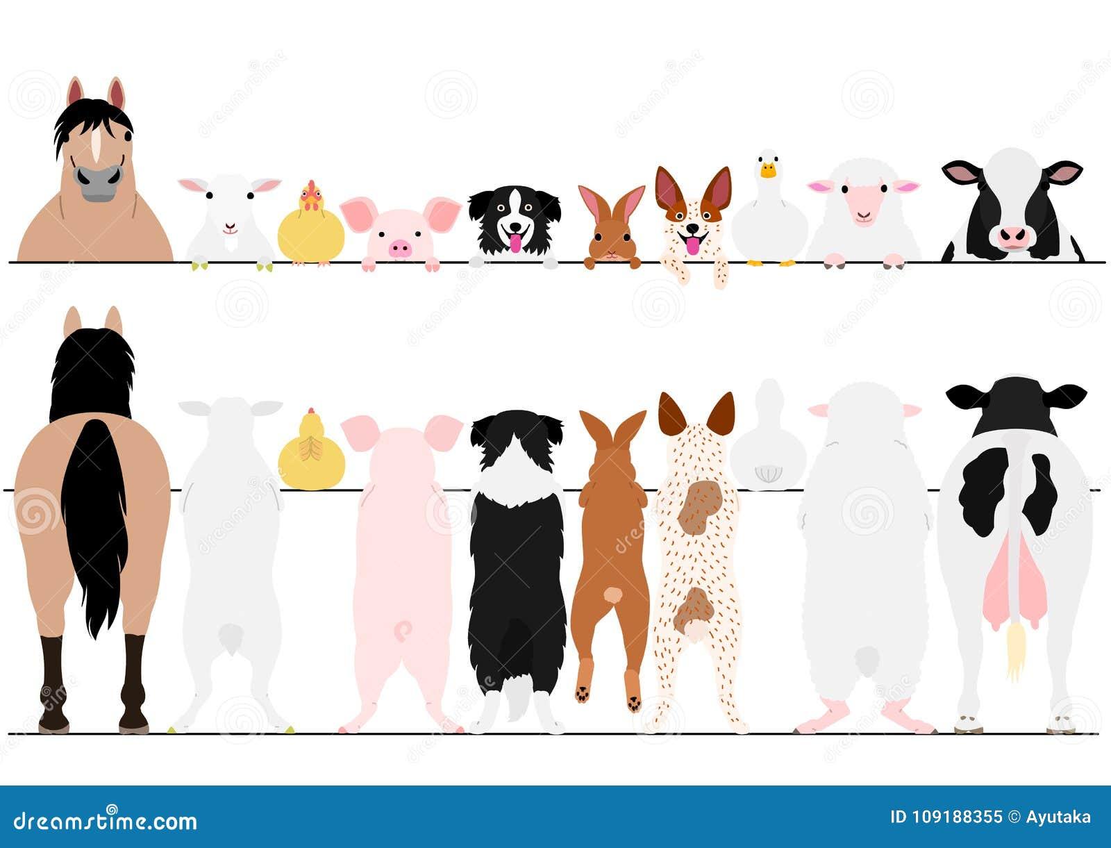 前面常设的牲口和后面边界集合