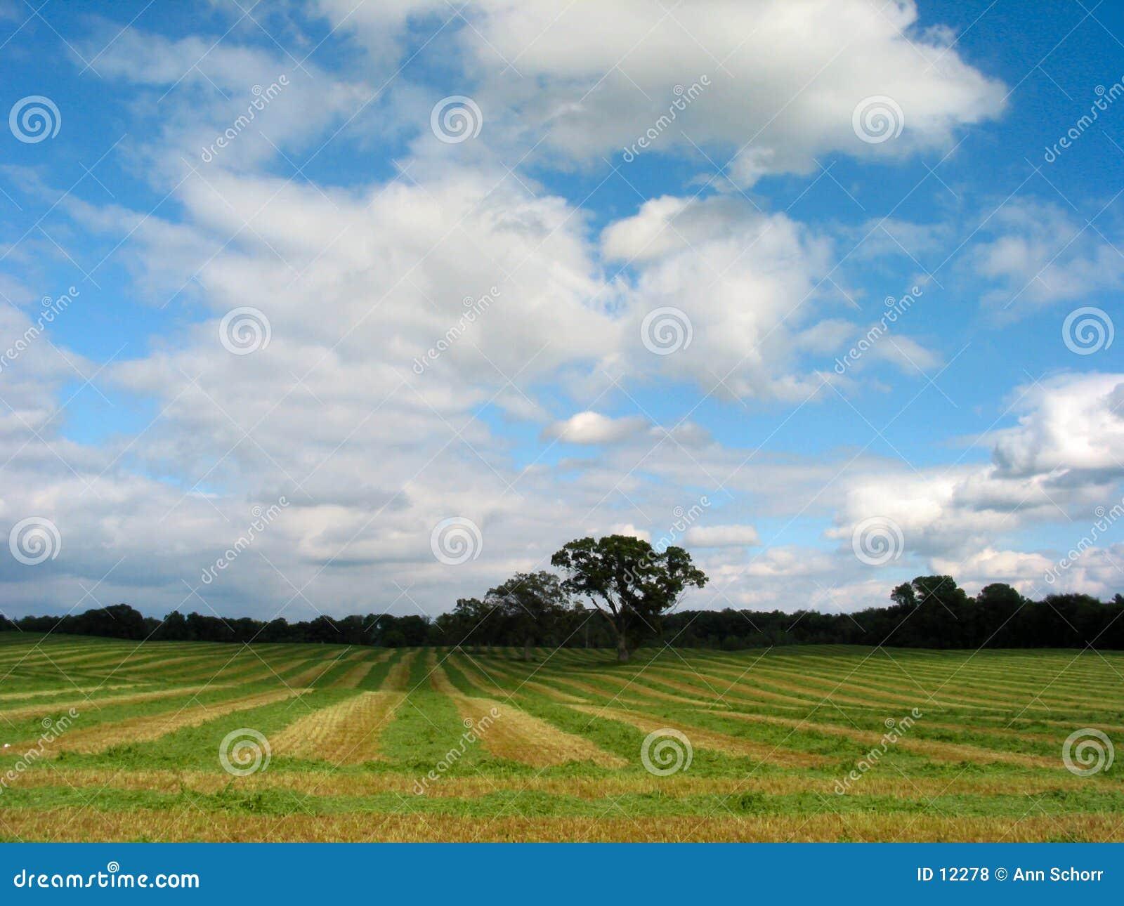 剪切新鲜的干草