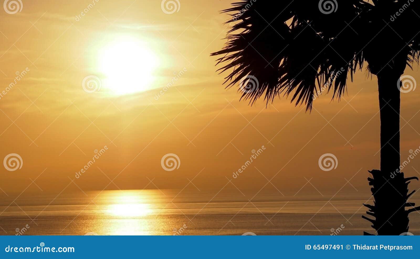 剪影与美丽的软的橙色天空的棕榈树反射海 日落在背景中 抽象橙色天空 剧烈的金黄sk