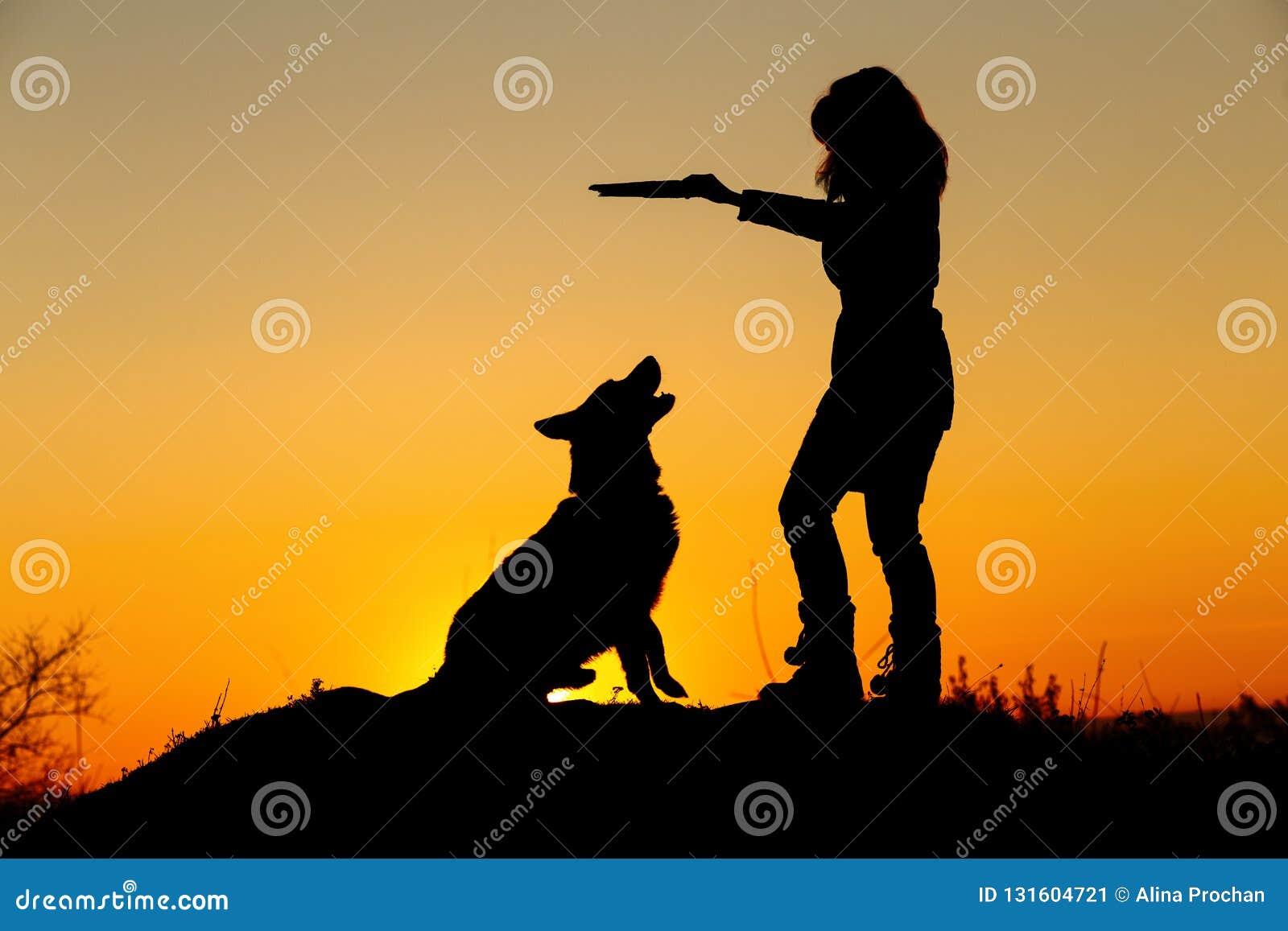 剪影妇女走与在领域的一条狗的在日落,使用与宠物的秋天夹克的一个女孩投掷木棍子
