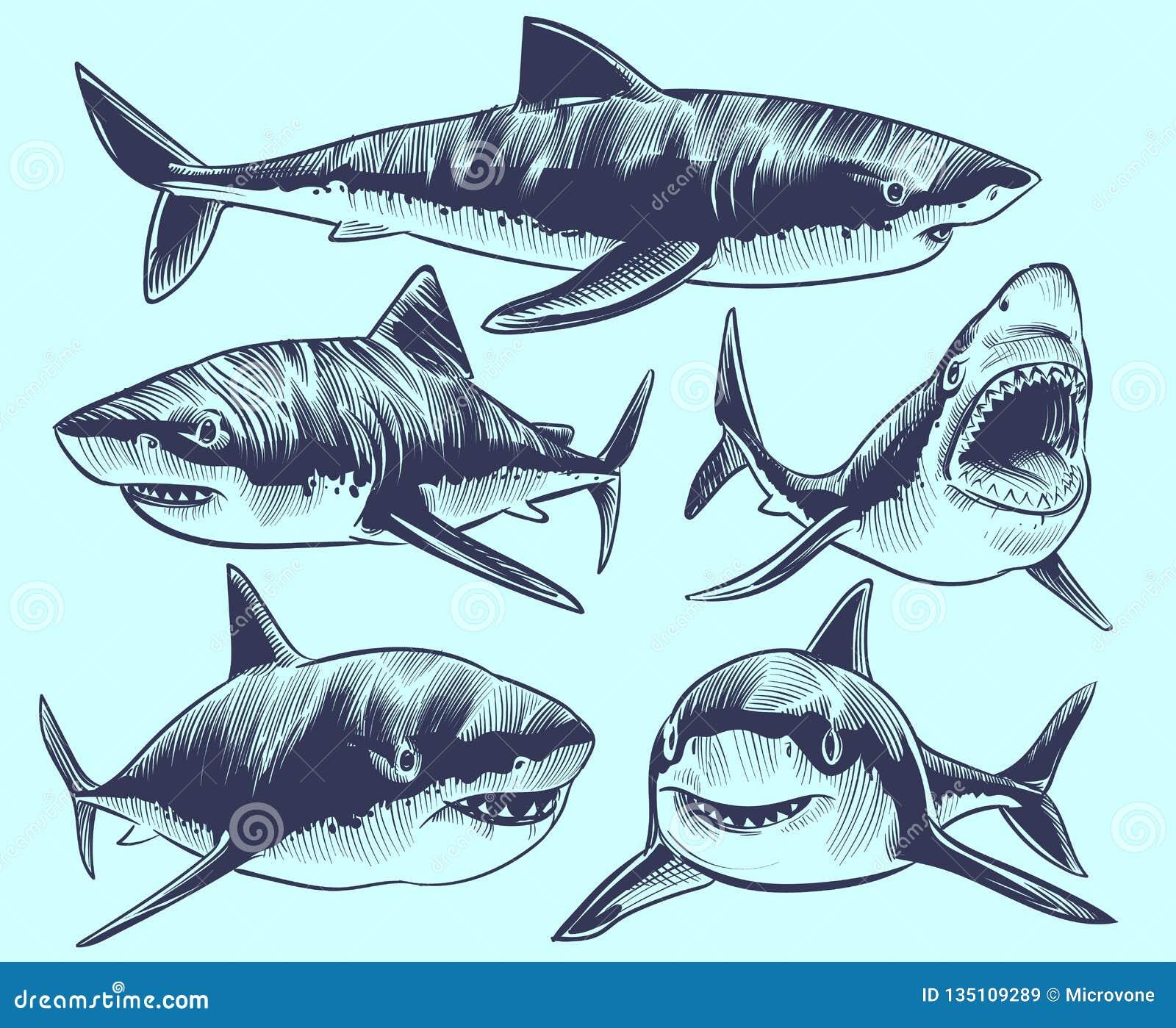 剪影鲨鱼 与开放嘴的游泳的鲨鱼 水下的动物传染媒介纹身花刺收藏