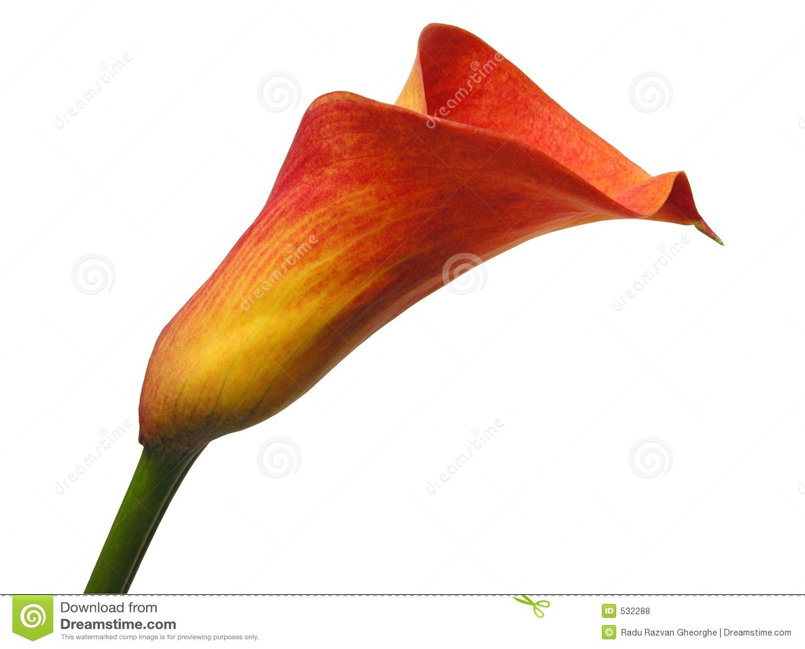 Download 剪报花路径 库存照片. 图片 包括有 lilly, 纤巧, 自然, 详细资料, 季节性, 工厂, 本质, beautifuler - 532288