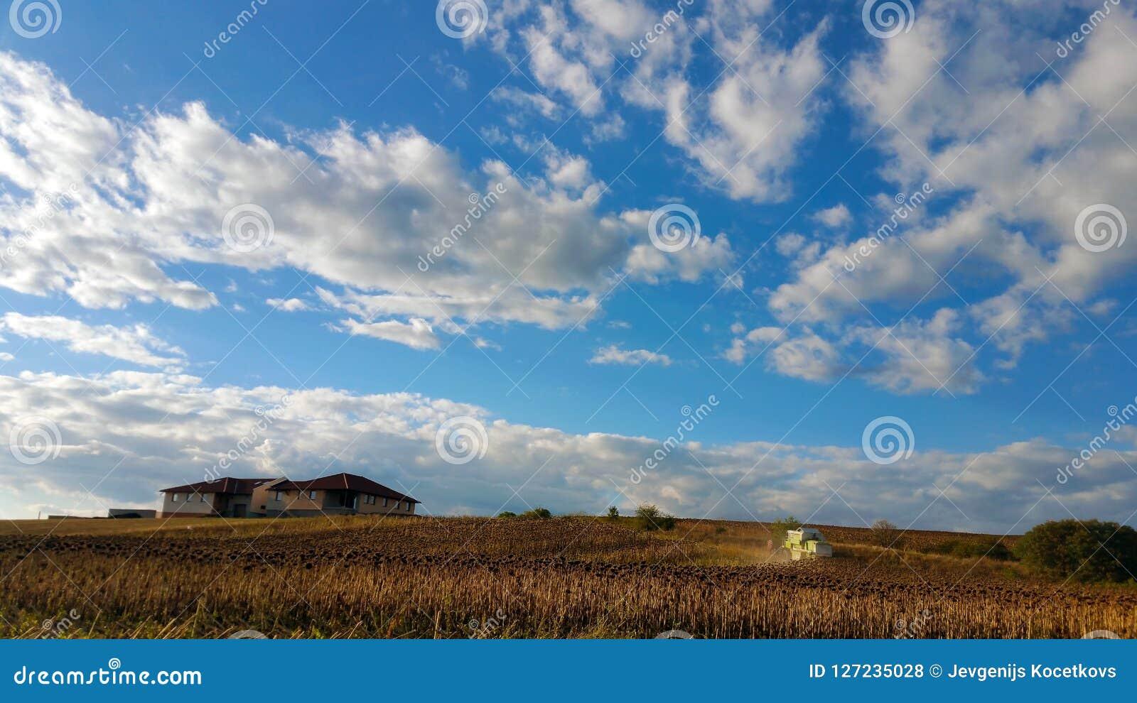 割在向日葵领域的联合收割机,反对与白色云彩的蓝天