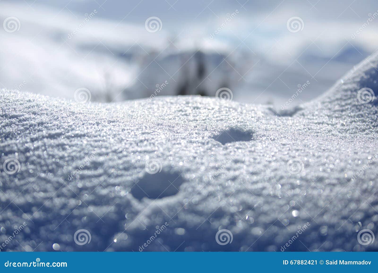 动物和阴影踪影在雪 野生动物弯曲的踪影在雪的 在雪的踪影留下不由人和c