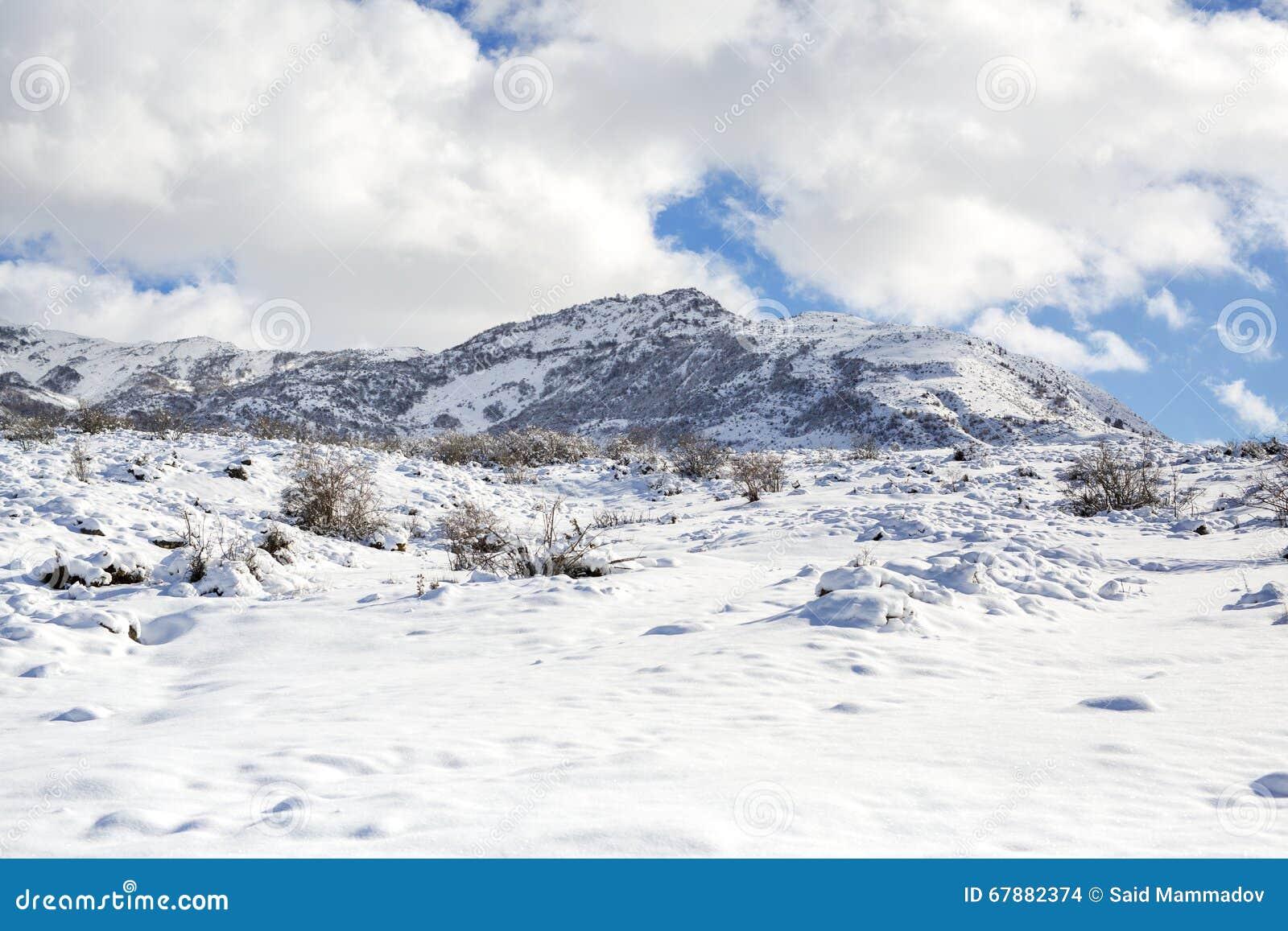 动物和阴影踪影在雪 野生动物弯曲的踪影在雪的 在雪的踪影留下不由人