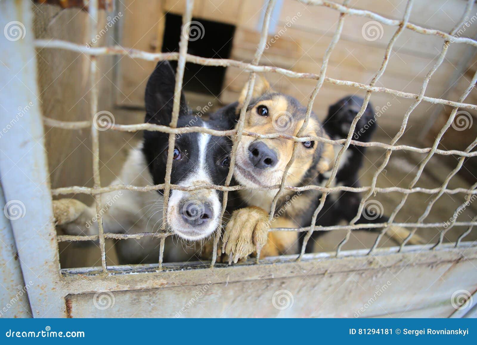 动物庇护所 狗的搭乘家