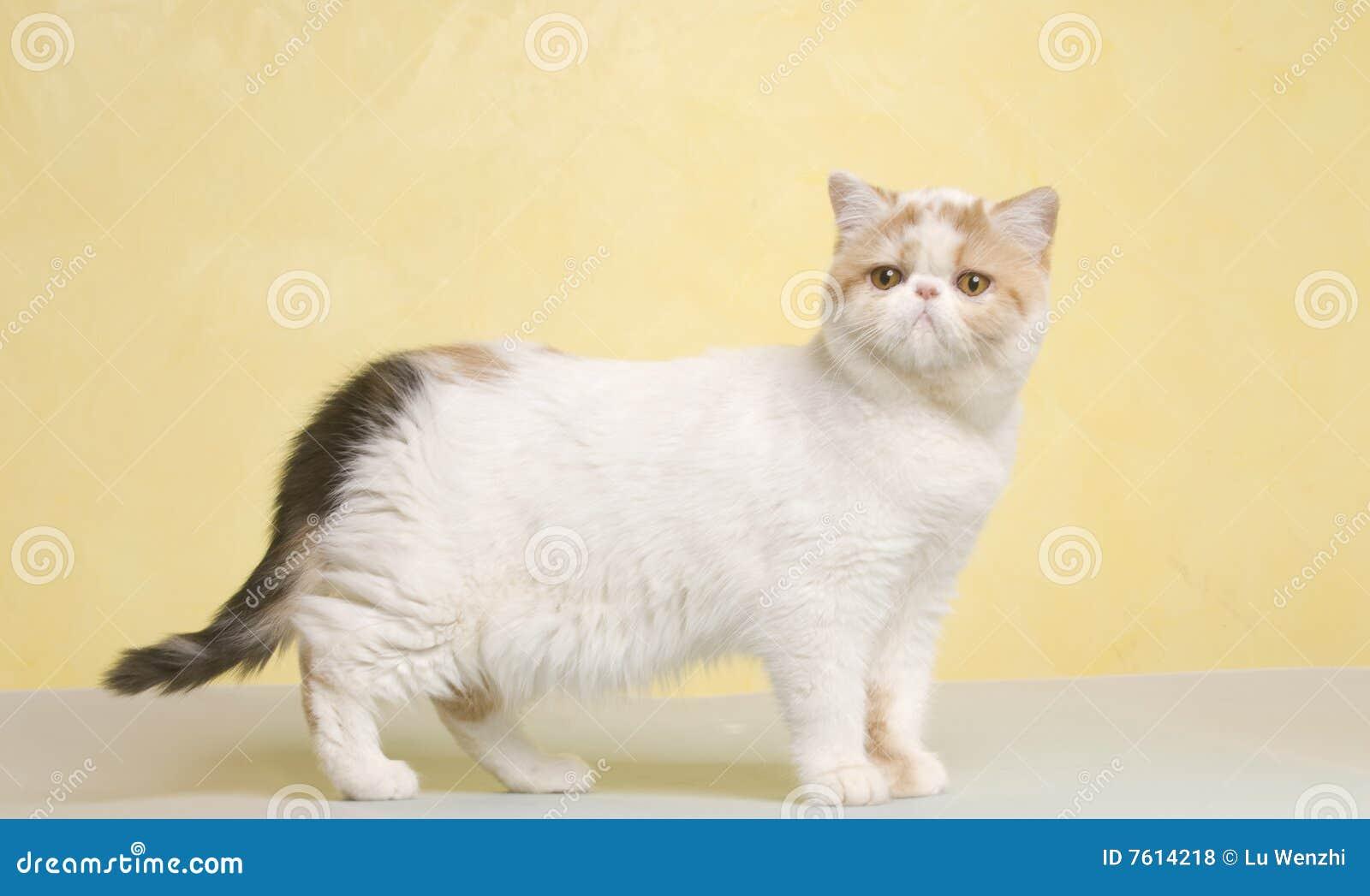 动物猫宠物