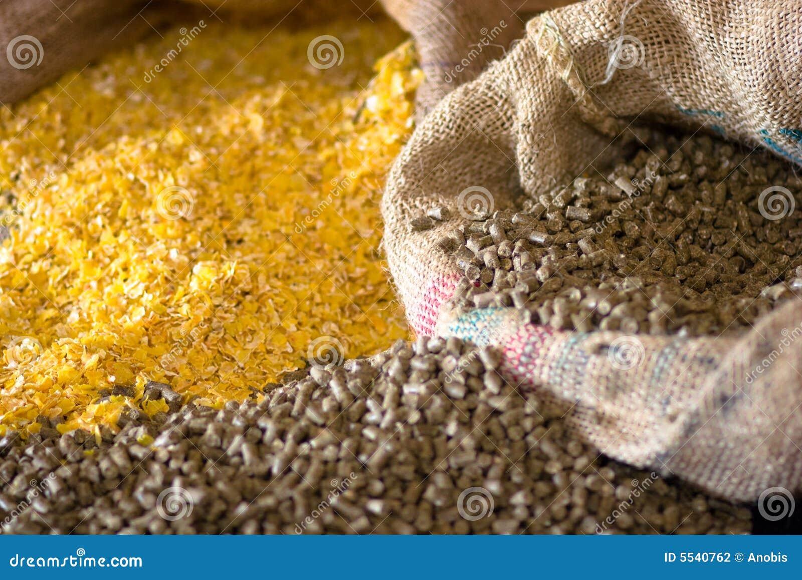 动物玉米食物