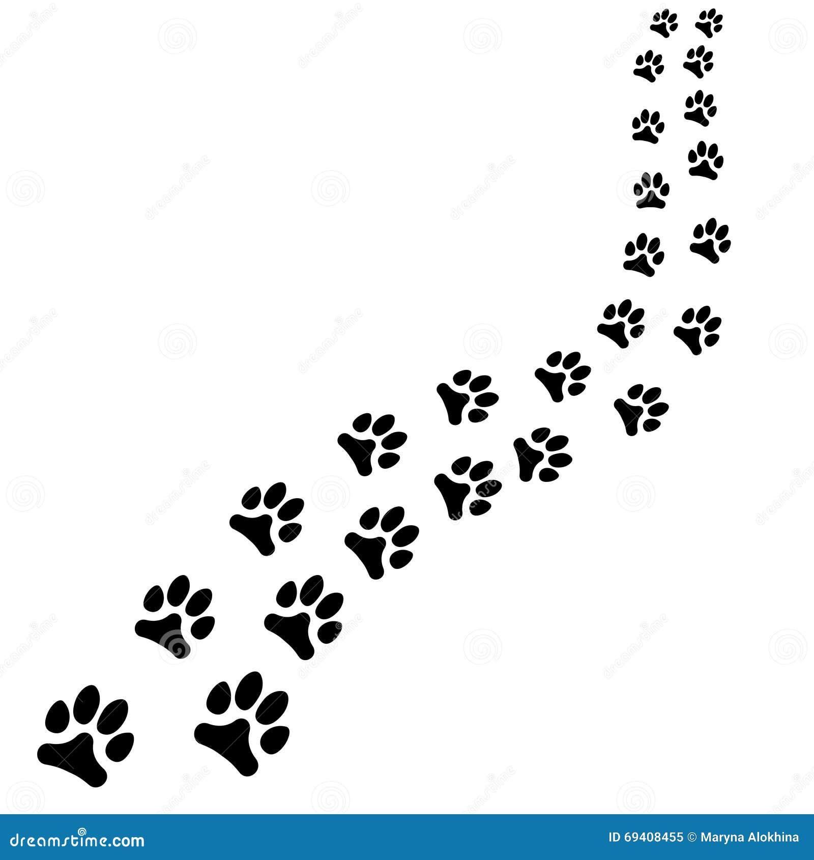 动物黑脚印狗或者猫道路道路在白色背景转动图片