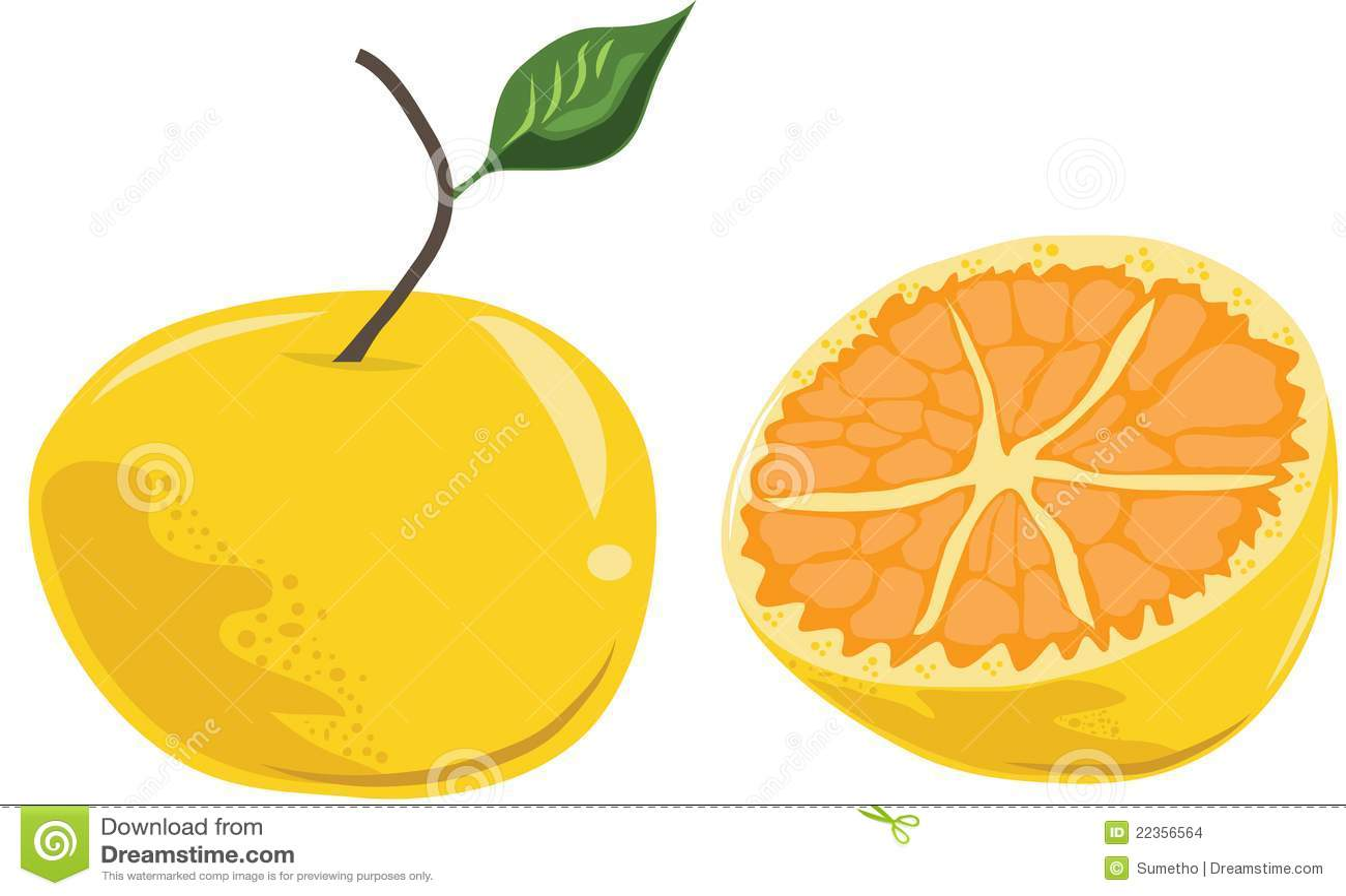 动画片新鲜的叶子橙色成熟向量