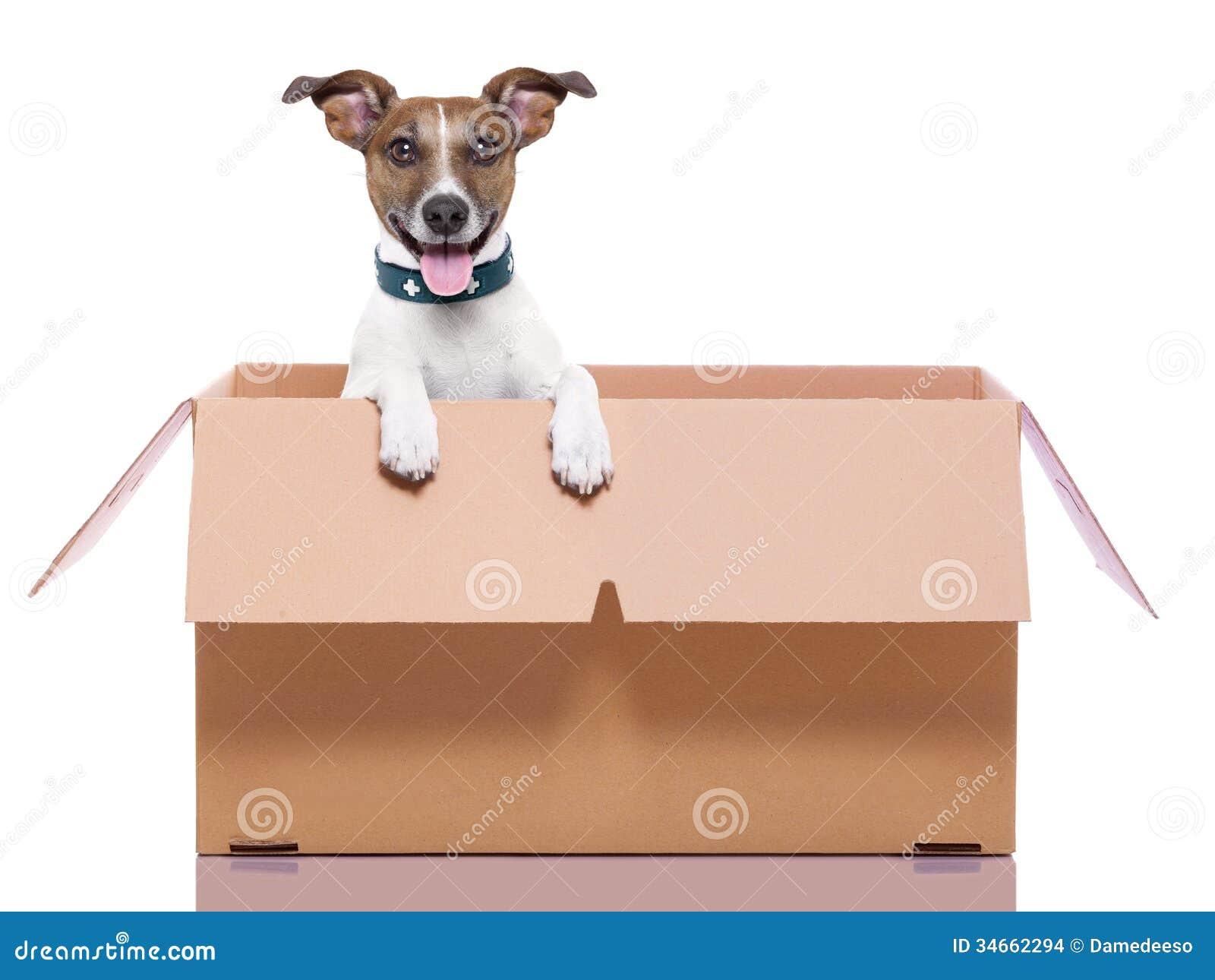 移动的箱子狗