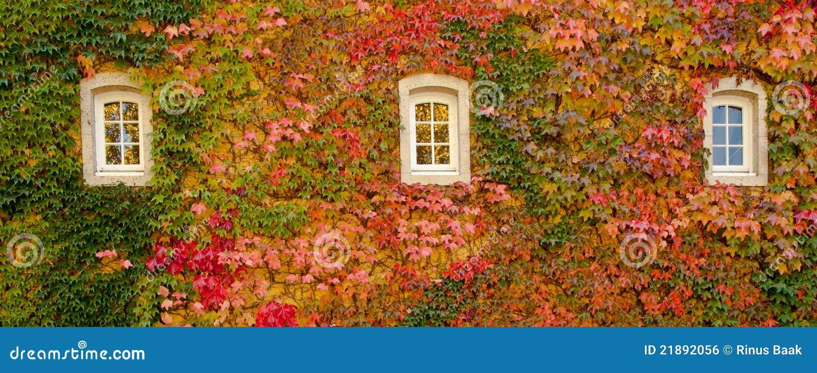 包括的常春藤墙壁