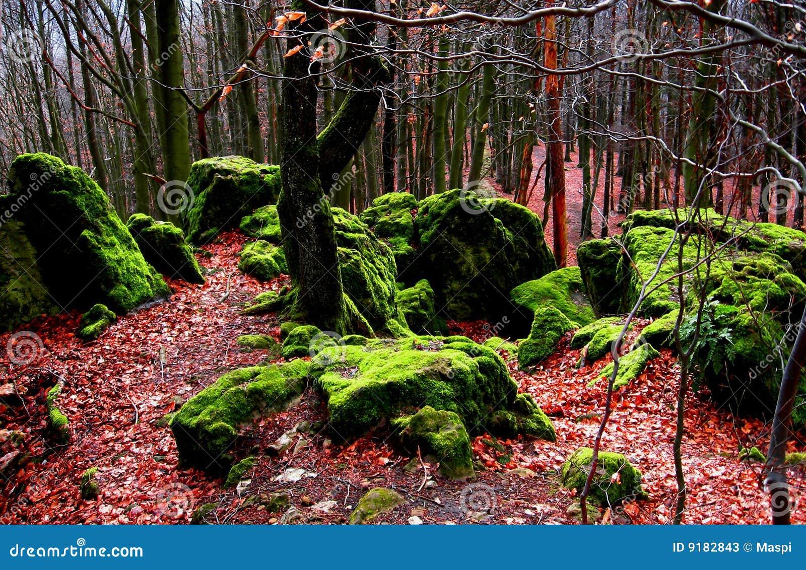 包括的青苔岩石