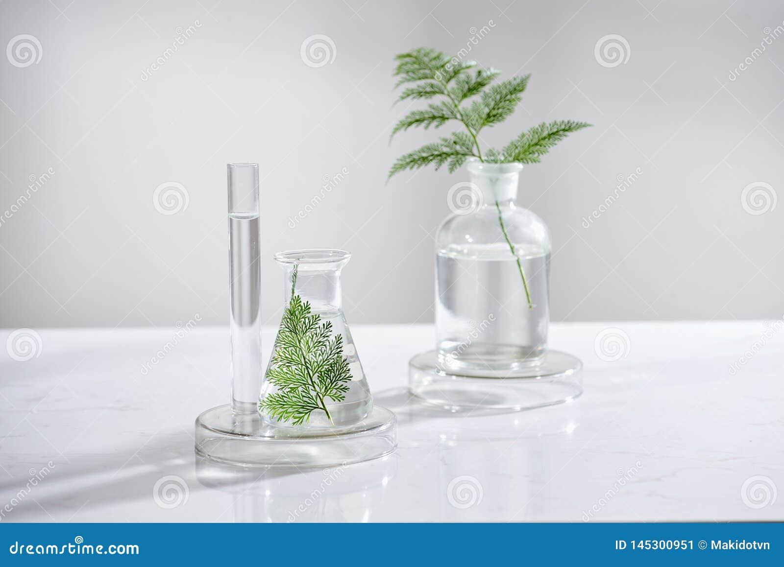 化妆自然skincare和精油芳香疗法 有机自然科学美容品 草本替代医学