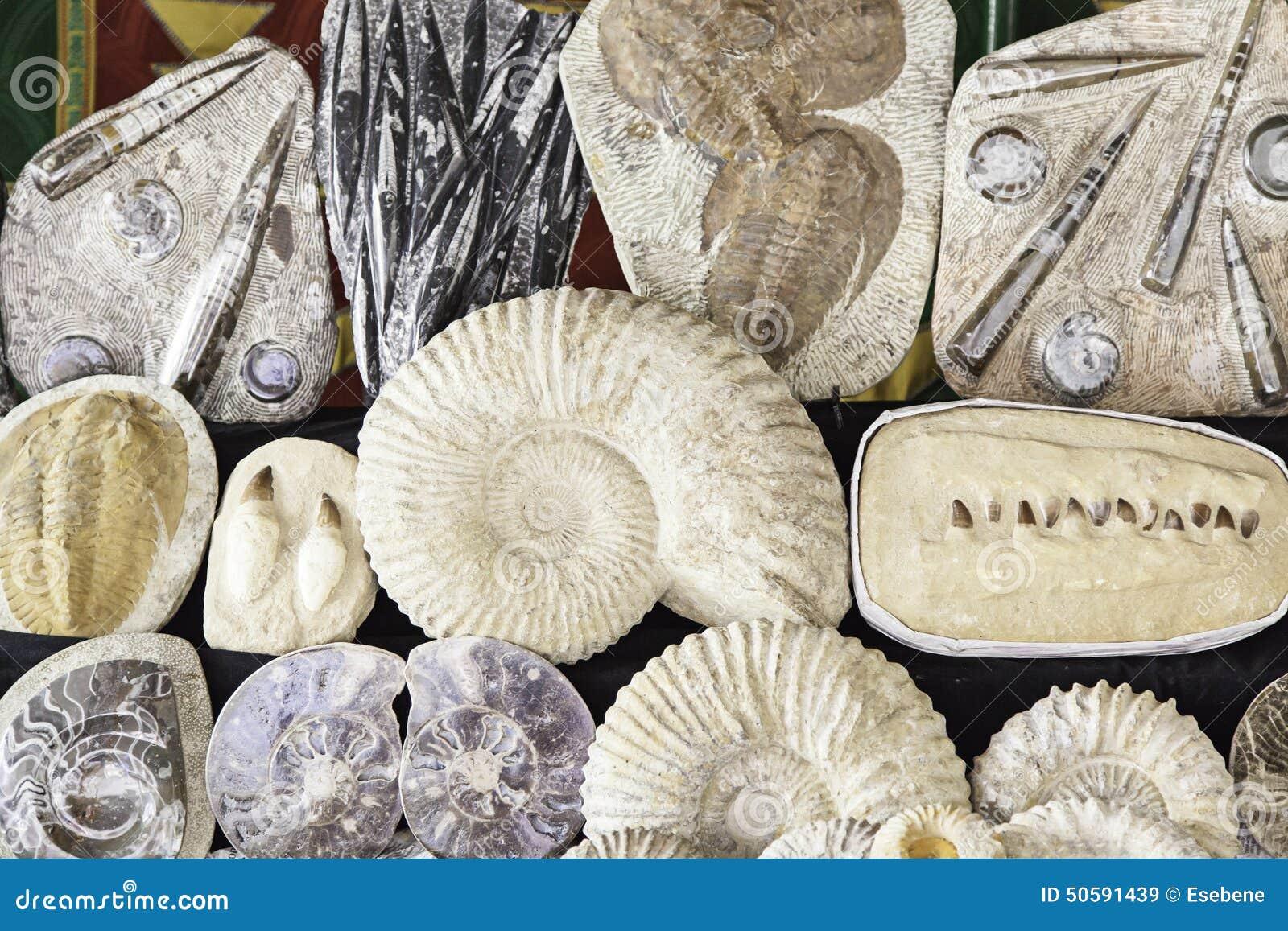 化石在一个老市场上