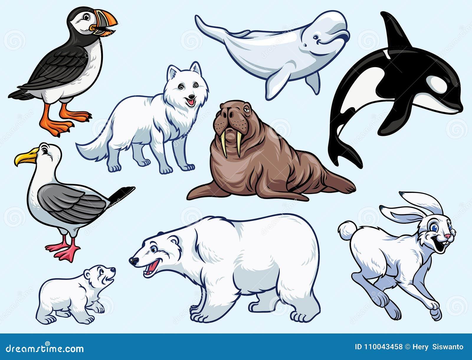 北极动物集合