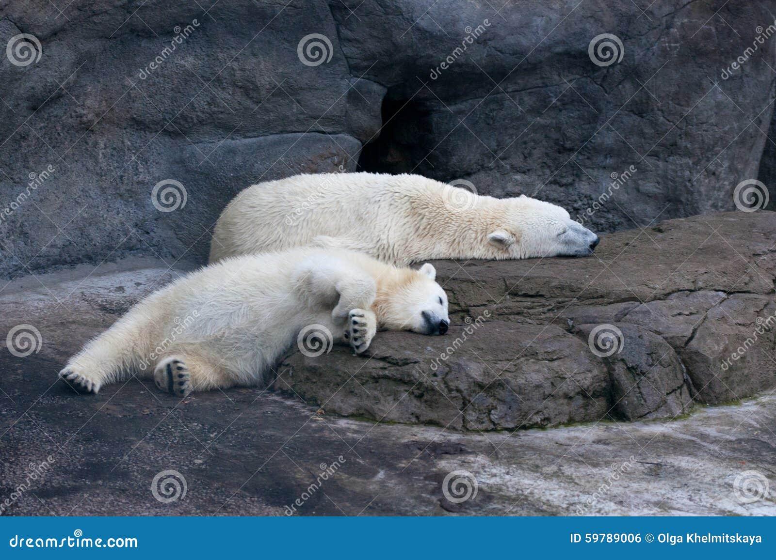 睡觉在蚂蚁的北极熊.岩石矿怎么v蚂蚁矿工图片