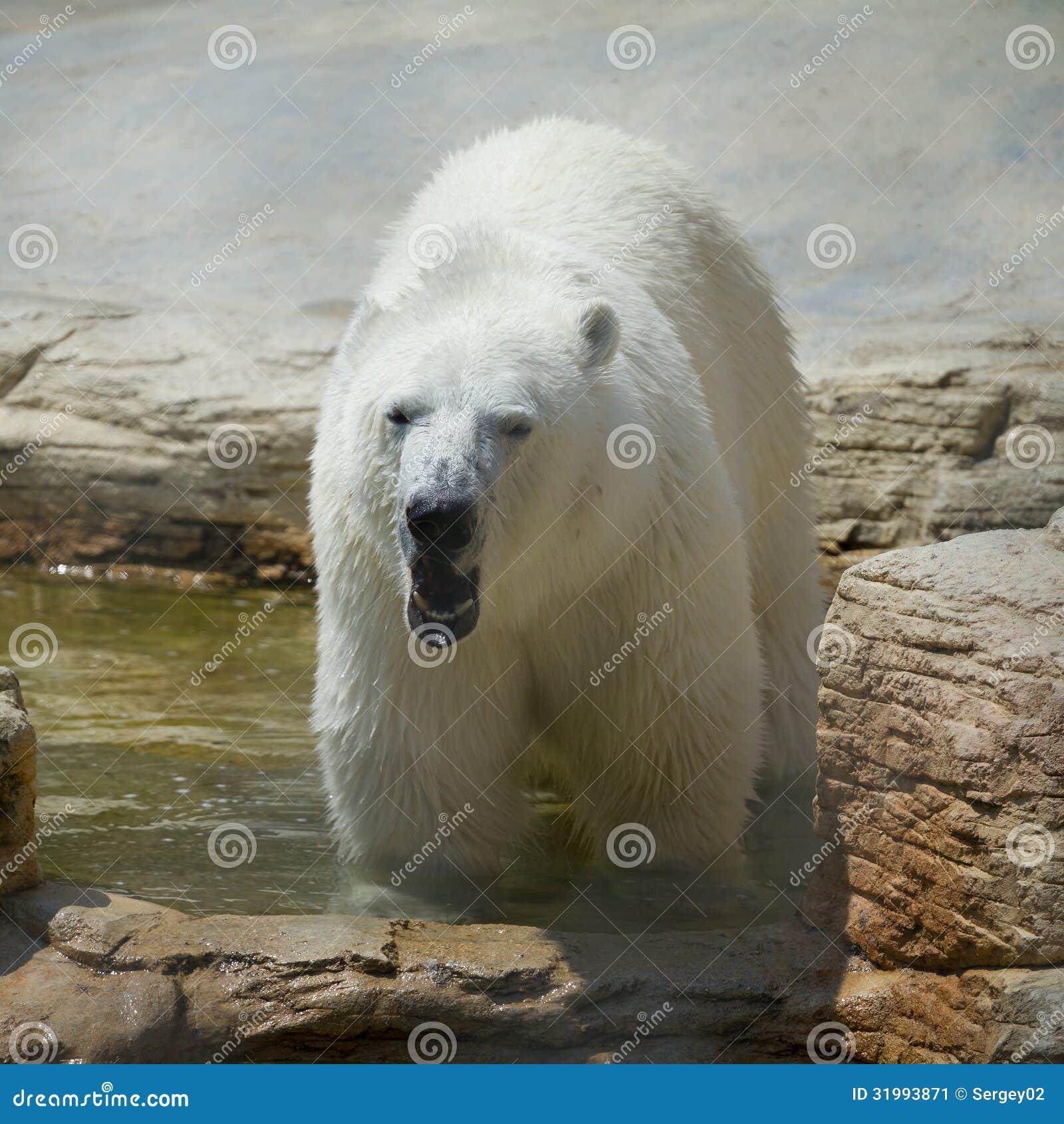 北极熊在动物园里在夏天.大象拼贴画树叶图片
