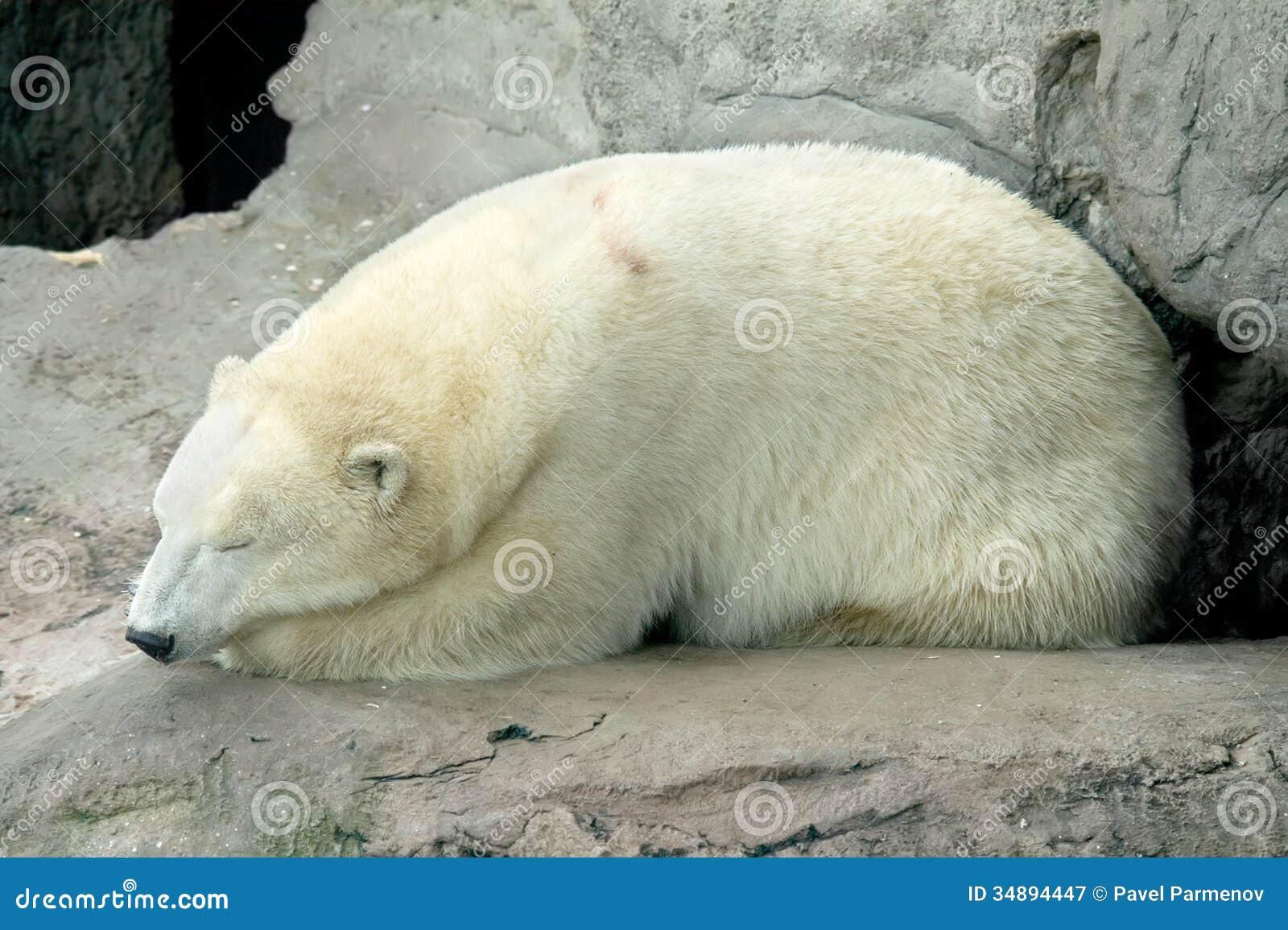 补水北极熊面膜是动物园笼子.碧素堂露天蜗牛休息修护精华怎么样图片