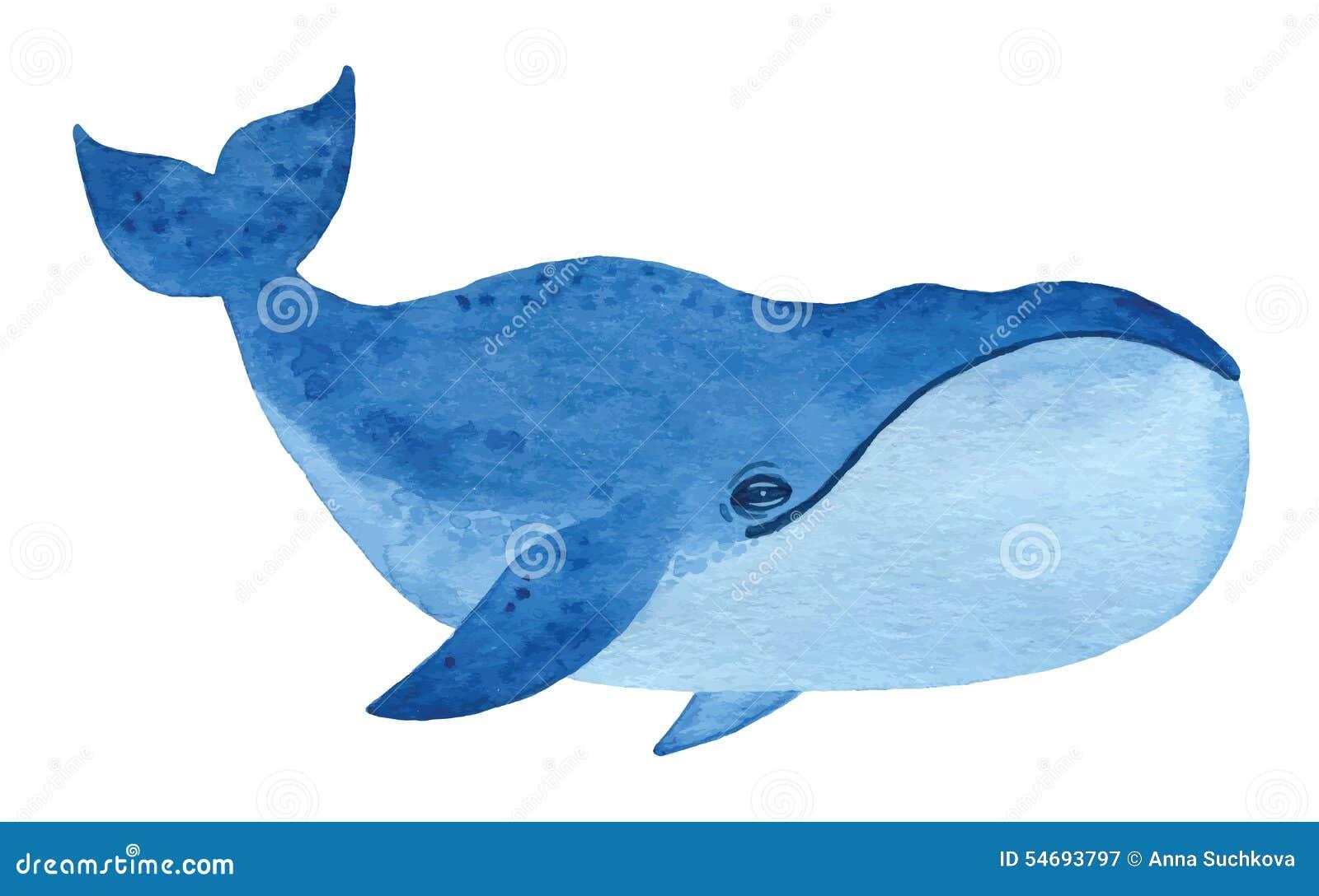北极露脊鲸