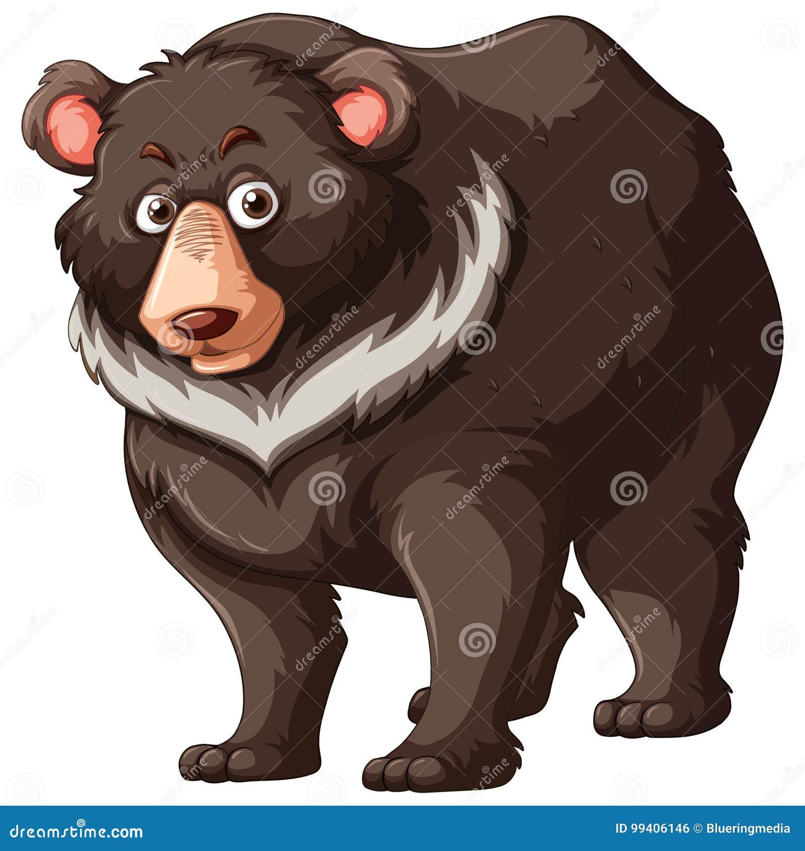 北美灰熊涉及白色背景