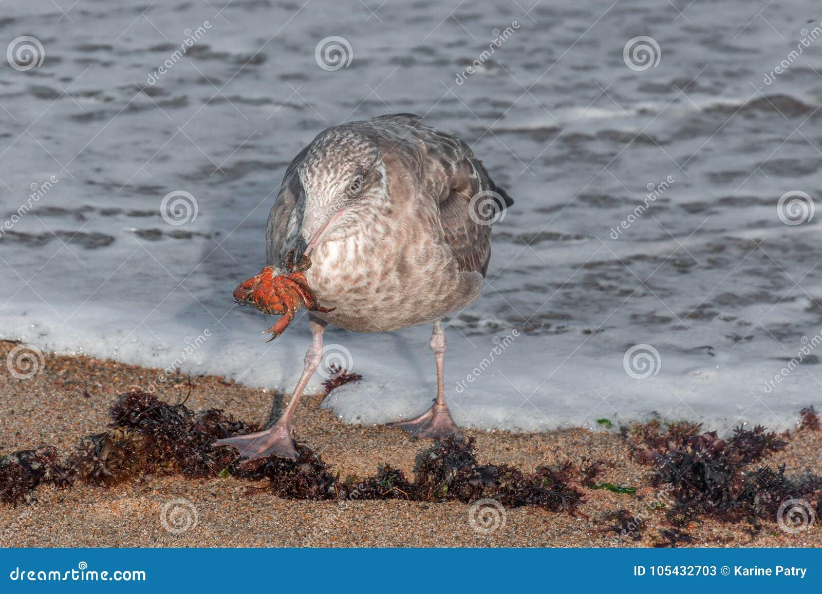 午餐的时刻在海滩