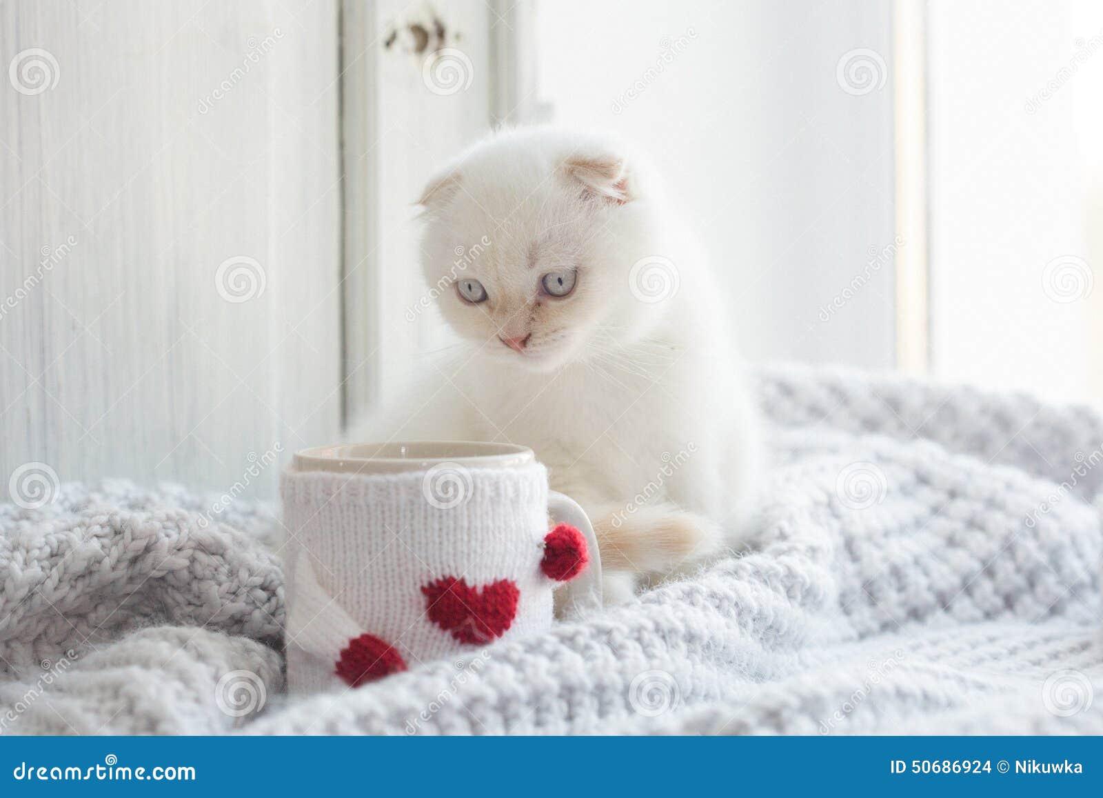 Download 华伦泰题材白色小猫 库存照片. 图片 包括有 伪造品, 华伦泰, 图象, 宠物, 毛皮, 里面, 国内, 纵容 - 50686924
