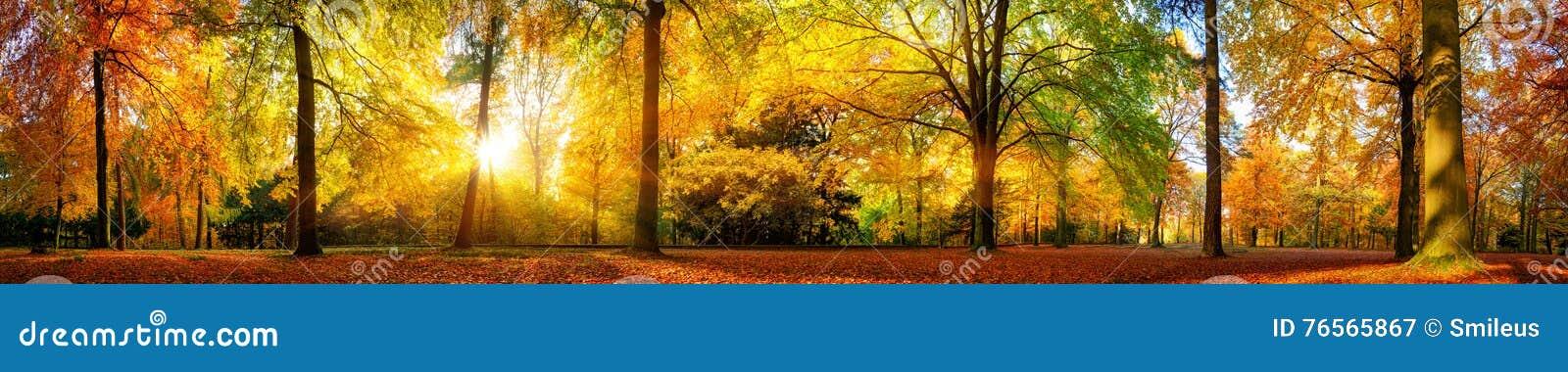 华美的森林全景在秋天