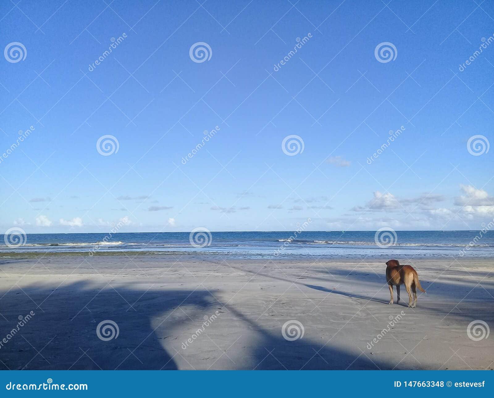 单独在海滩的狗
