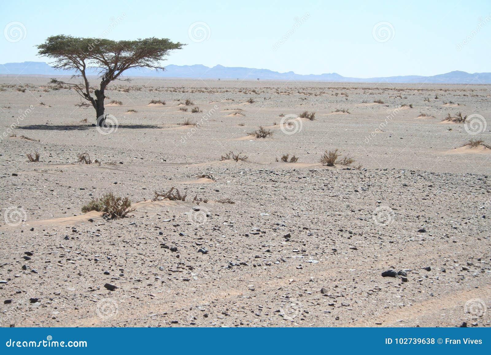 单独树在沙漠