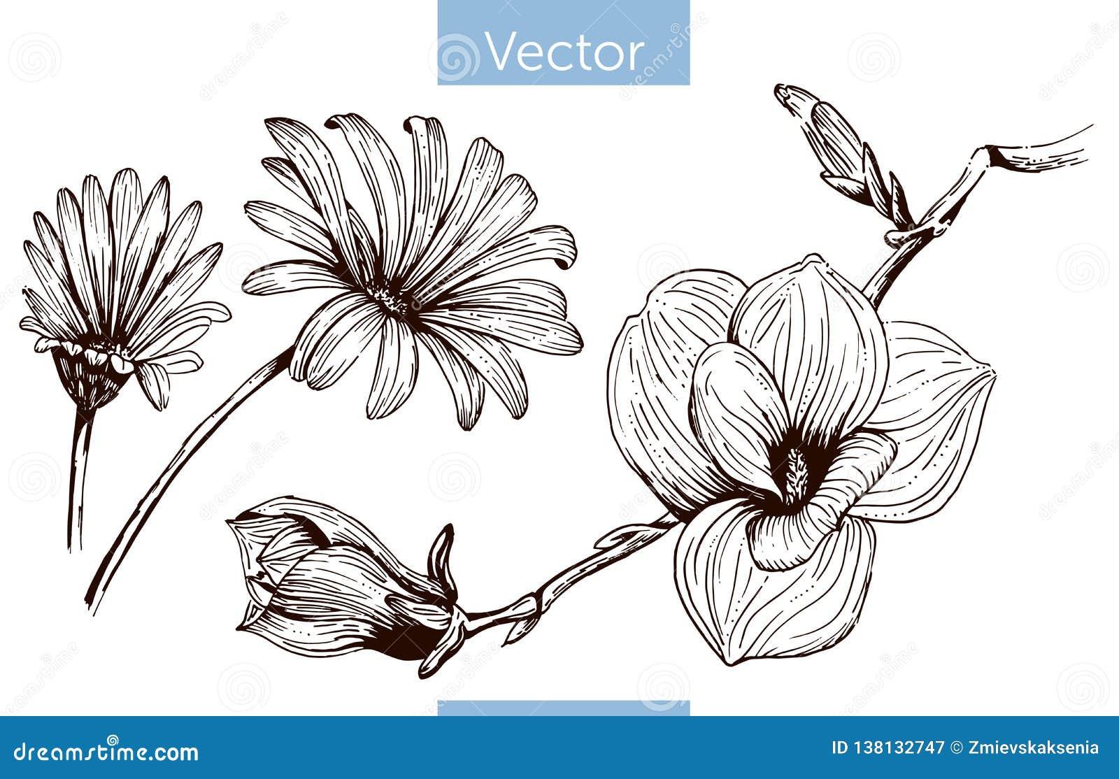 单色在白色背景的传染媒介手拉的花